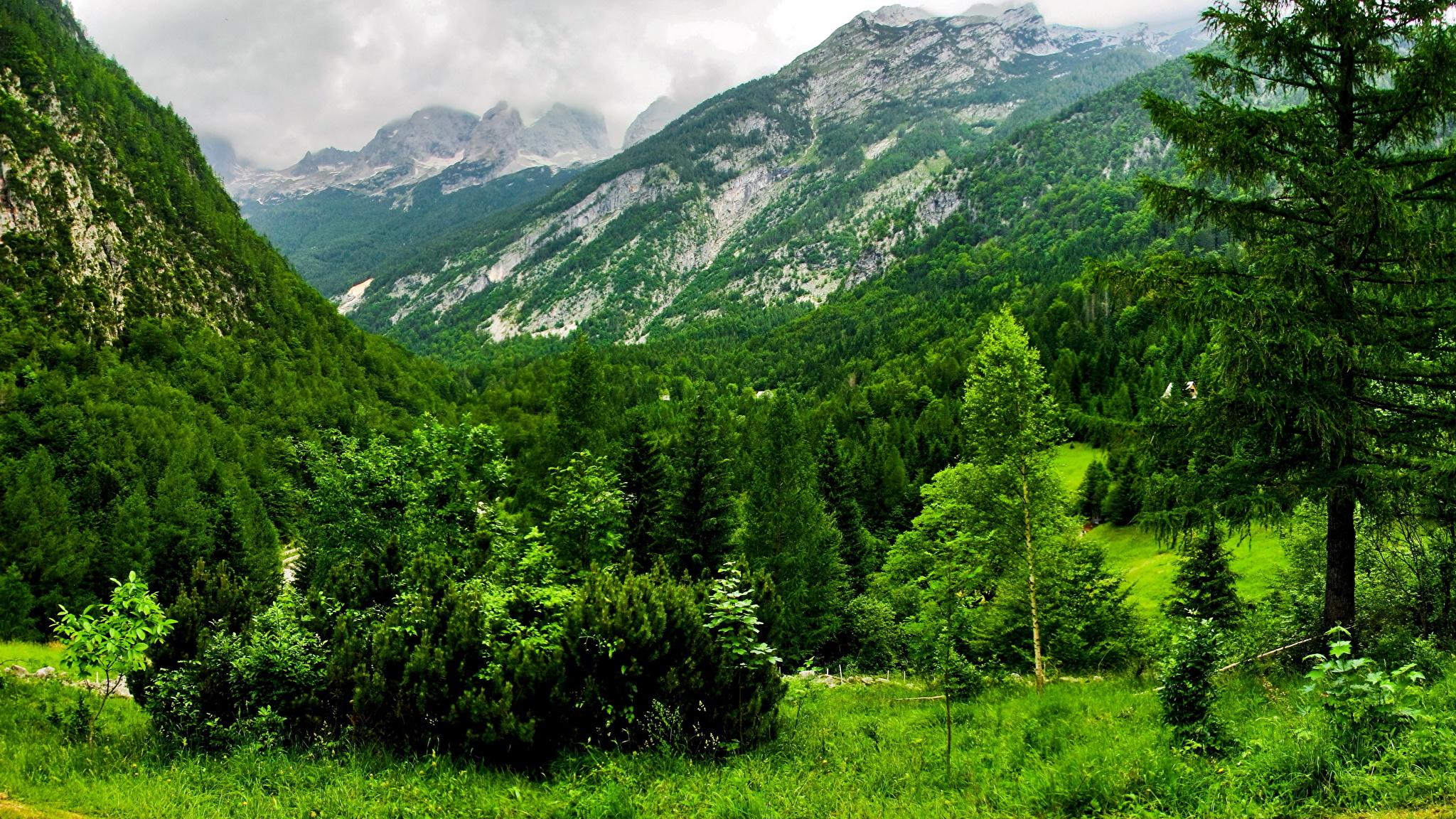 горы растительность русло бесплатно