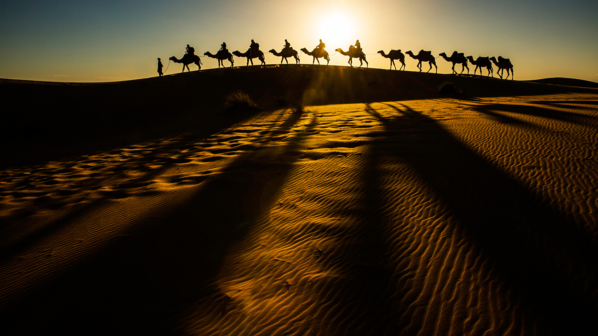 Картинка Верблюды Силуэт Природа Пустыни Песок 1920x1080 силуэты силуэта песке песка