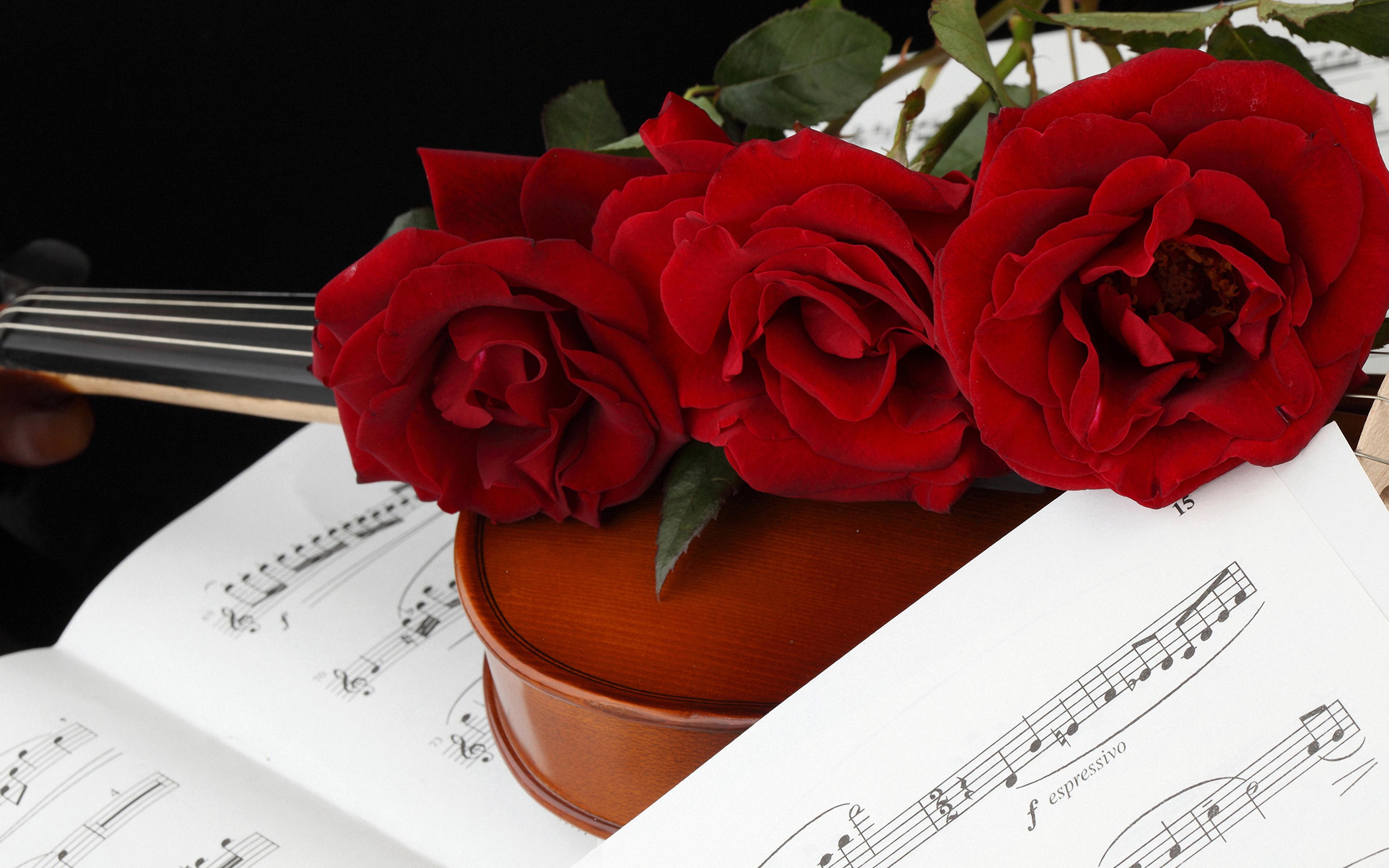 Фотографии Ноты Розы бордовые цветок Трое 3 3840x2400 роза Бордовый бордовая темно красный Цветы три втроем