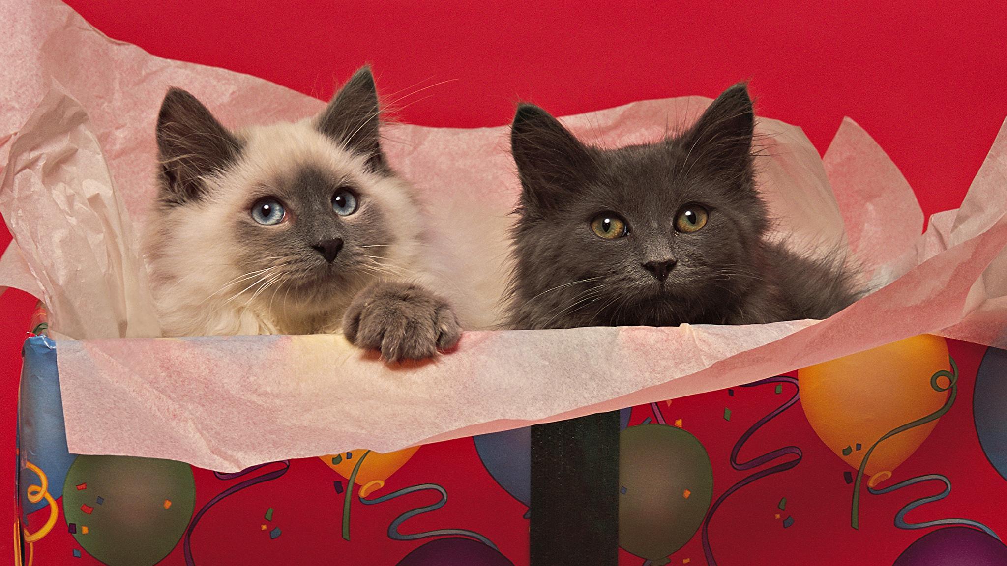 прикольные праздник кот животные бесплатно