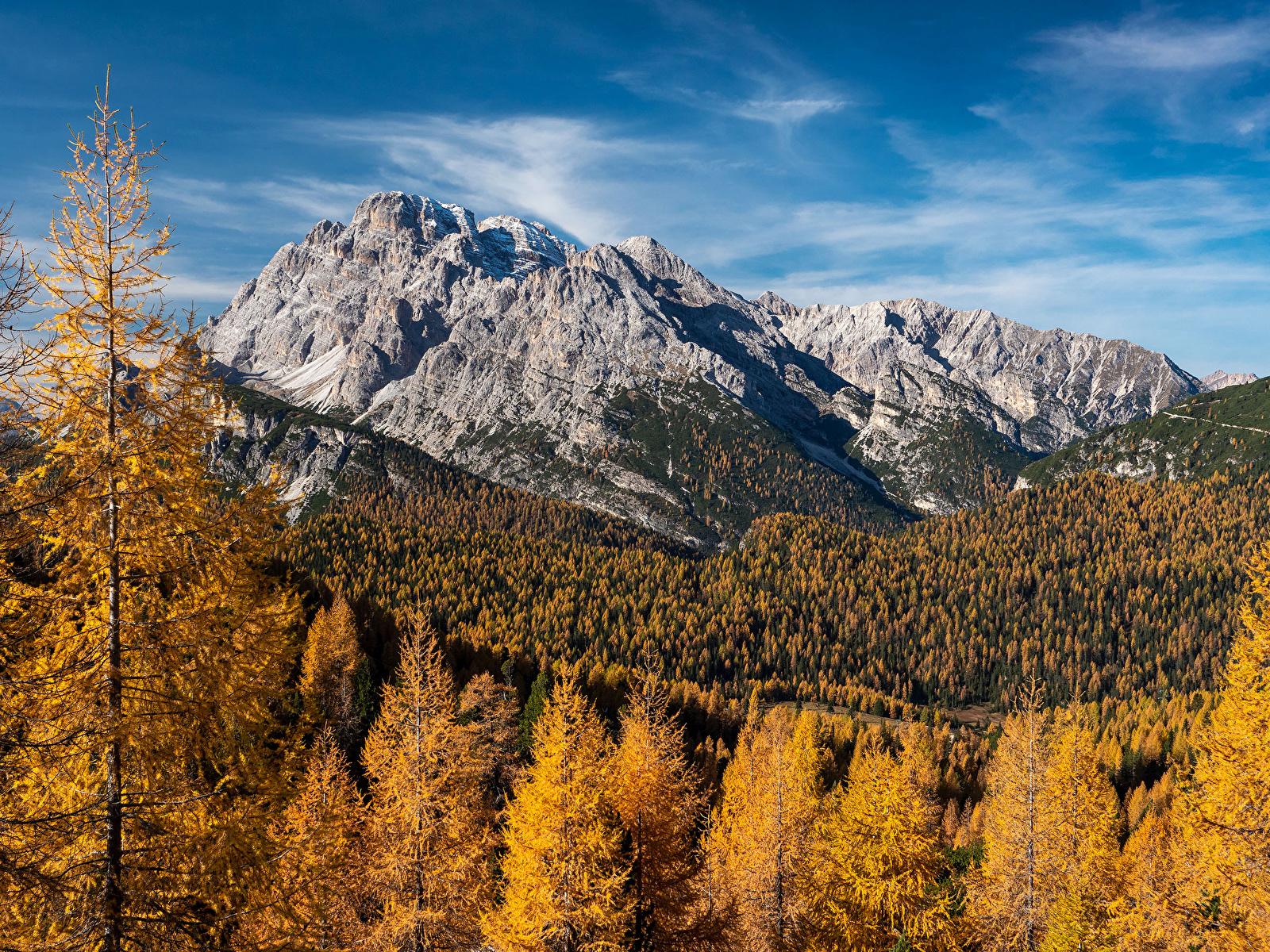 Фотографии Альпы Германия Горы Осень Природа лес мха 1600x1200 альп гора осенние Леса Мох мхом