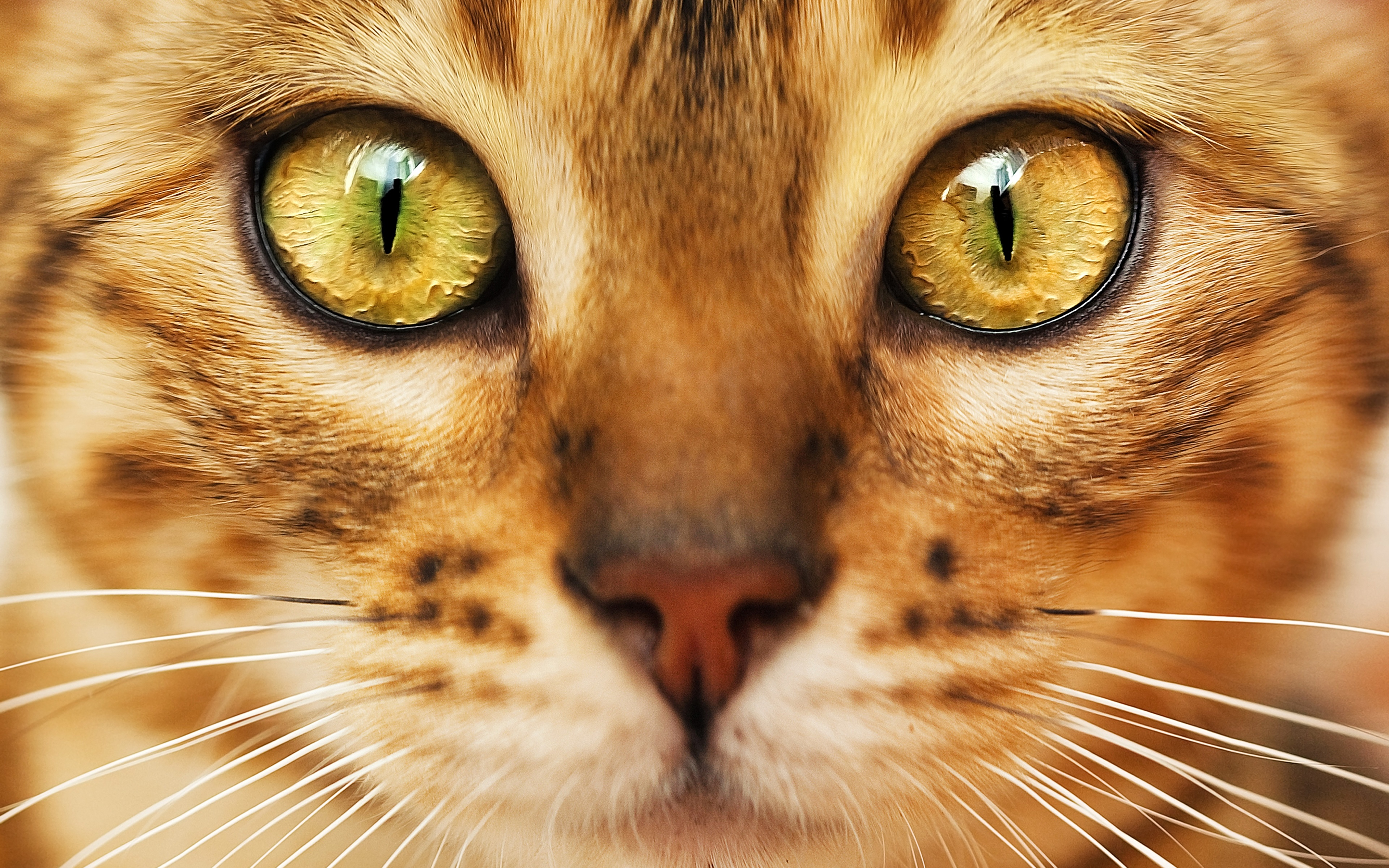 Кот лицо зеленые глаза загрузить