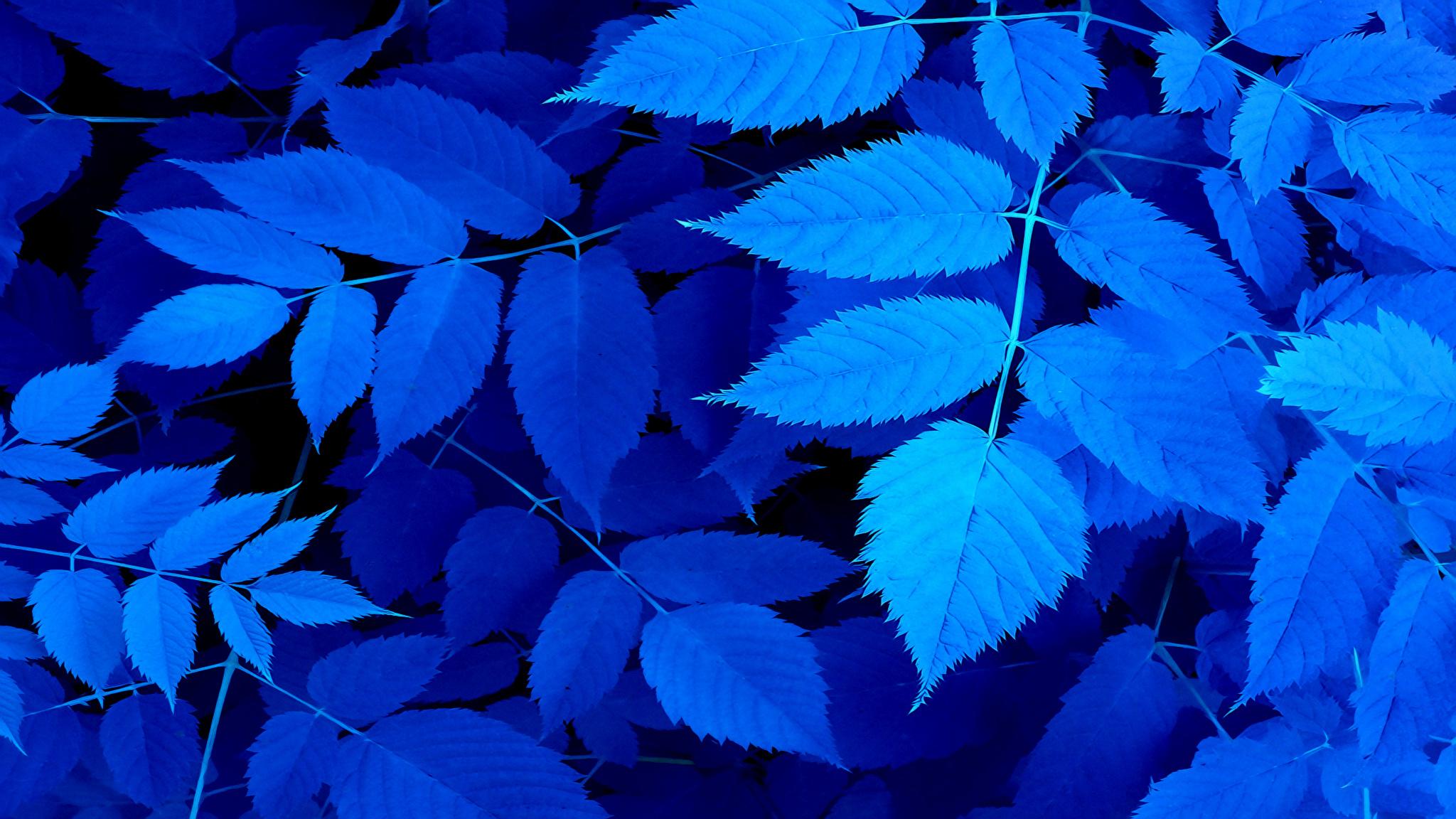 ветка листья земля онлайн