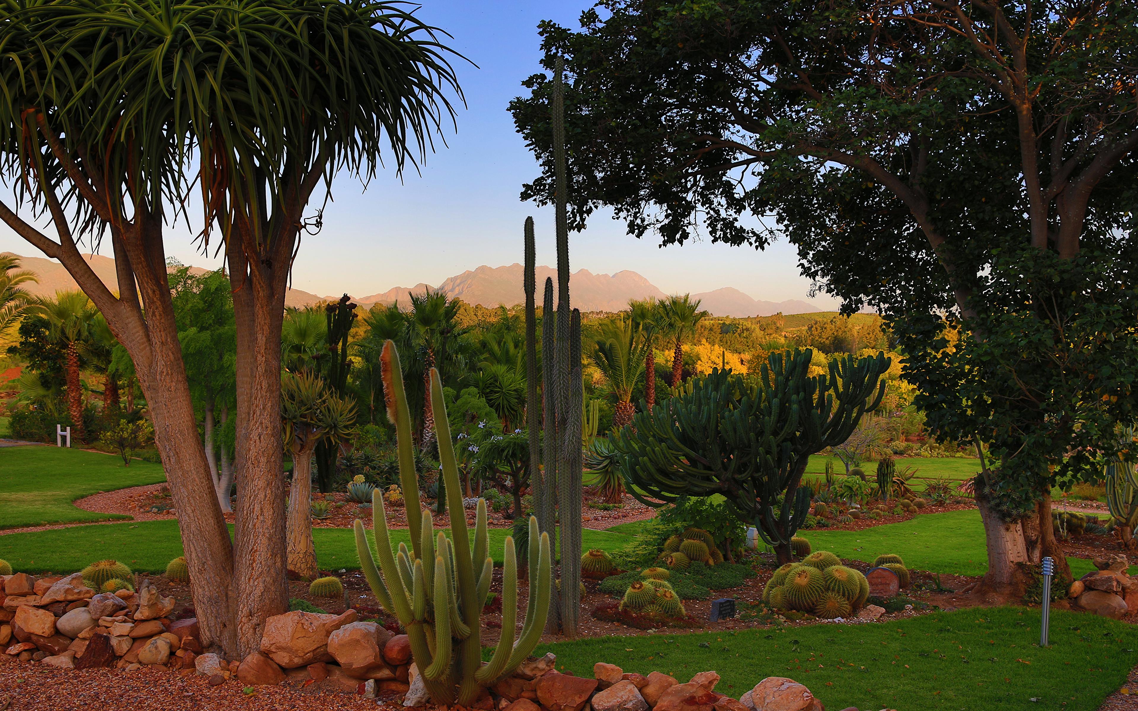 Картинки Африка Южно-Африканская Республика Природа Парки Кактусы дерева 3840x2400 ЮАР дерево Деревья деревьев