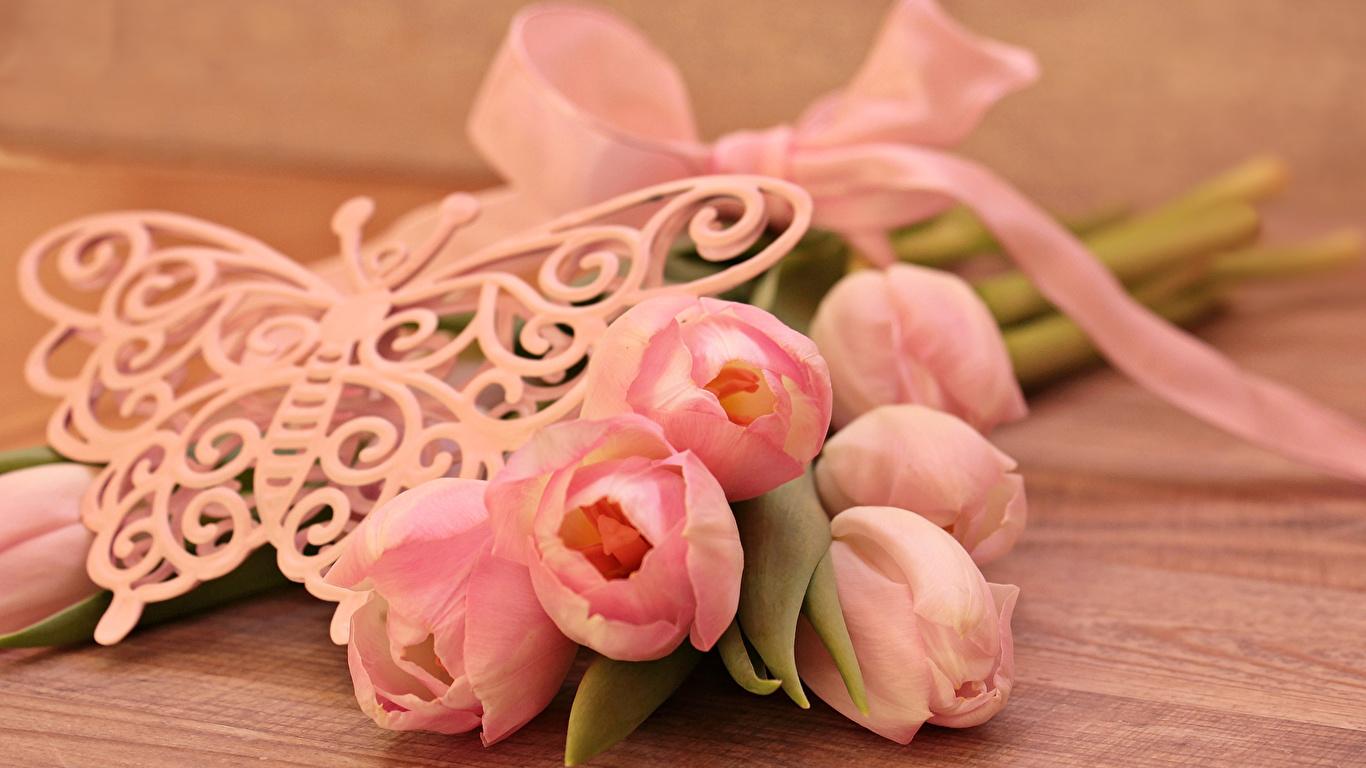 Фотография бабочка розовая Тюльпаны цветок Доски 1366x768 Бабочки тюльпан Розовый розовые розовых Цветы