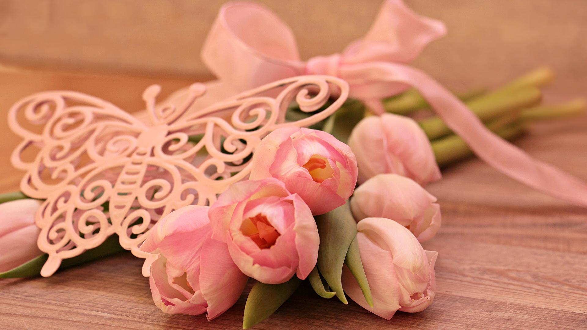 Фотография бабочка розовая Тюльпаны цветок Доски 1920x1080 Бабочки тюльпан Розовый розовые розовых Цветы