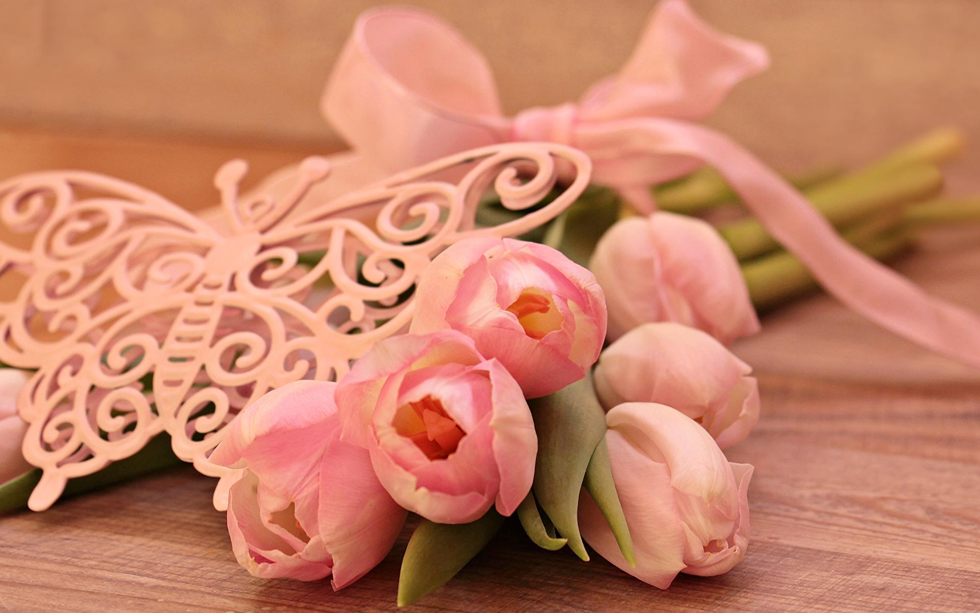 Фотография бабочка розовая Тюльпаны цветок Доски 1920x1200 Бабочки тюльпан Розовый розовые розовых Цветы