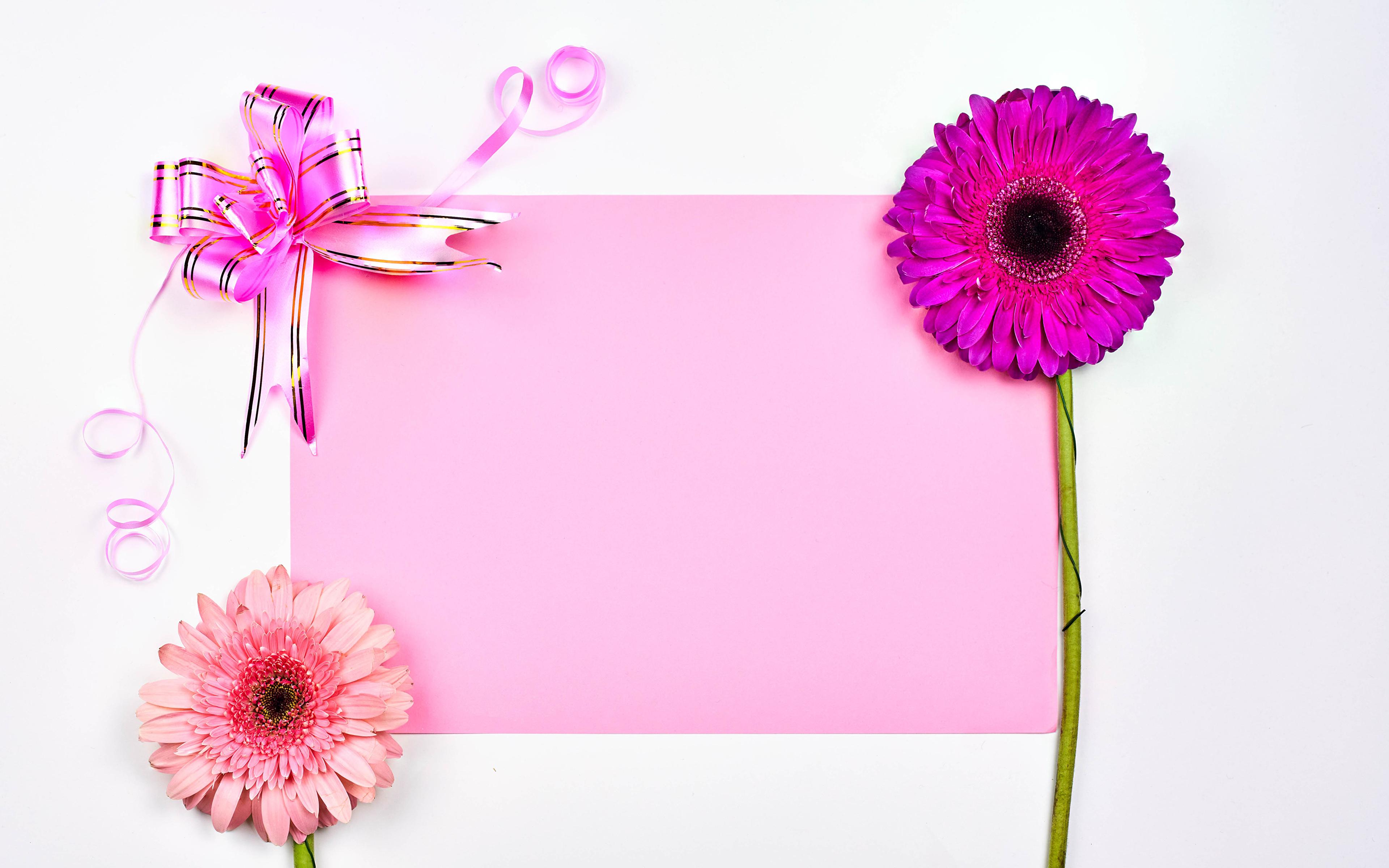 Фотографии День всех влюблённых Лист бумаги Герберы Цветы Бантик Шаблон поздравительной открытки Белый фон 3840x2400 День святого Валентина гербера цветок бант бантики белом фоне белым фоном