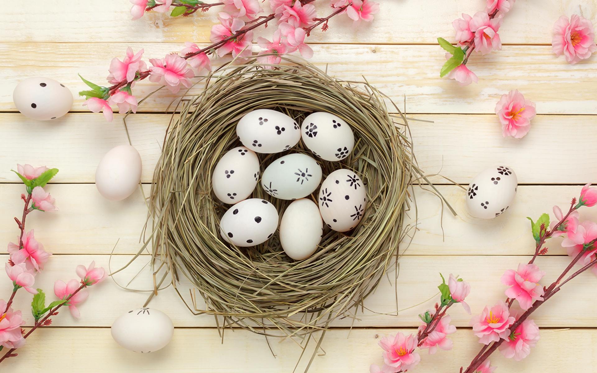Фотография Пасха Яйца гнезде Доски 1920x1200 яиц яйцо яйцами гнезда Гнездо