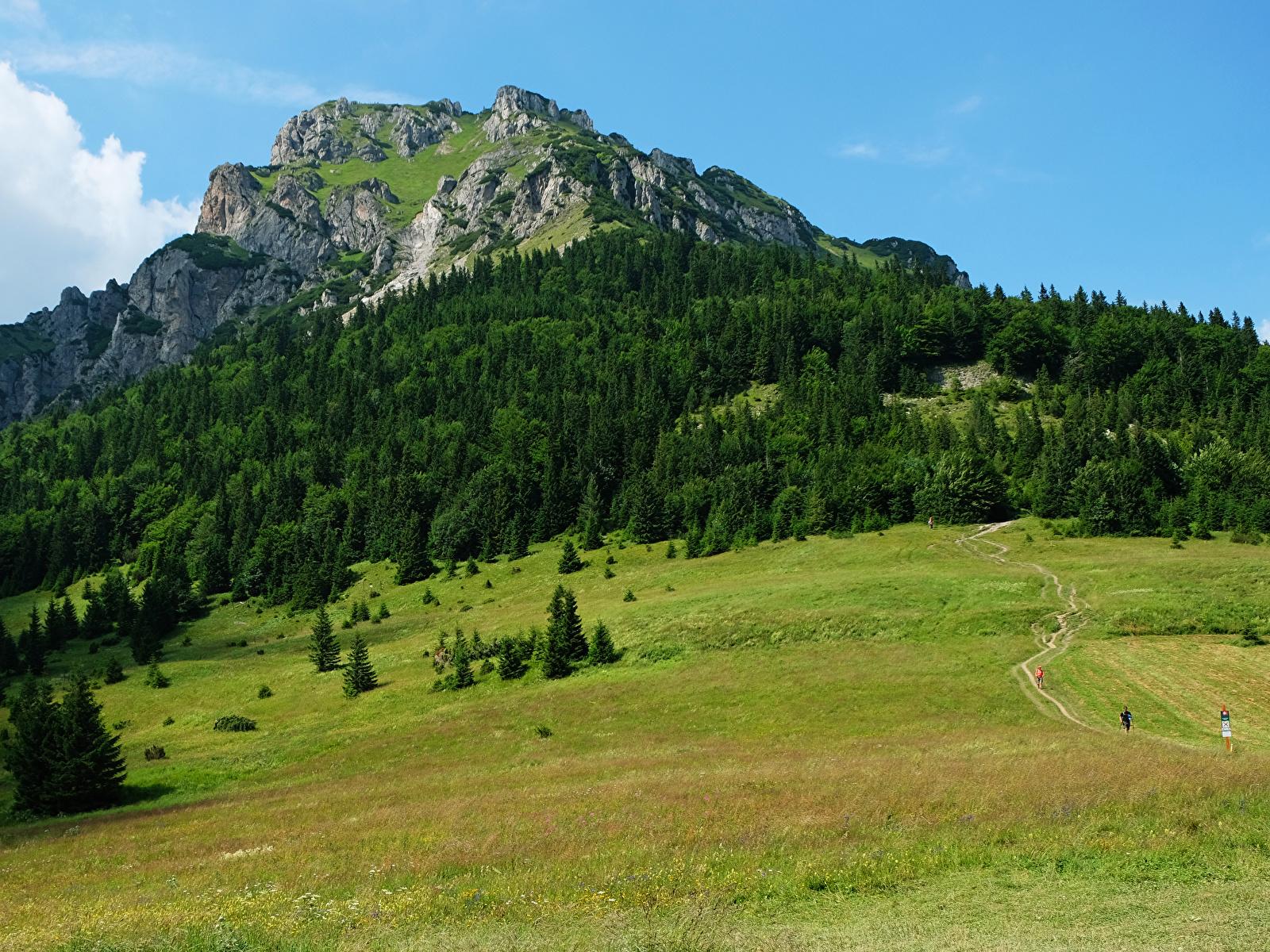 Фото Словакия Tatras гора Природа Луга Леса 1600x1200 Горы лес