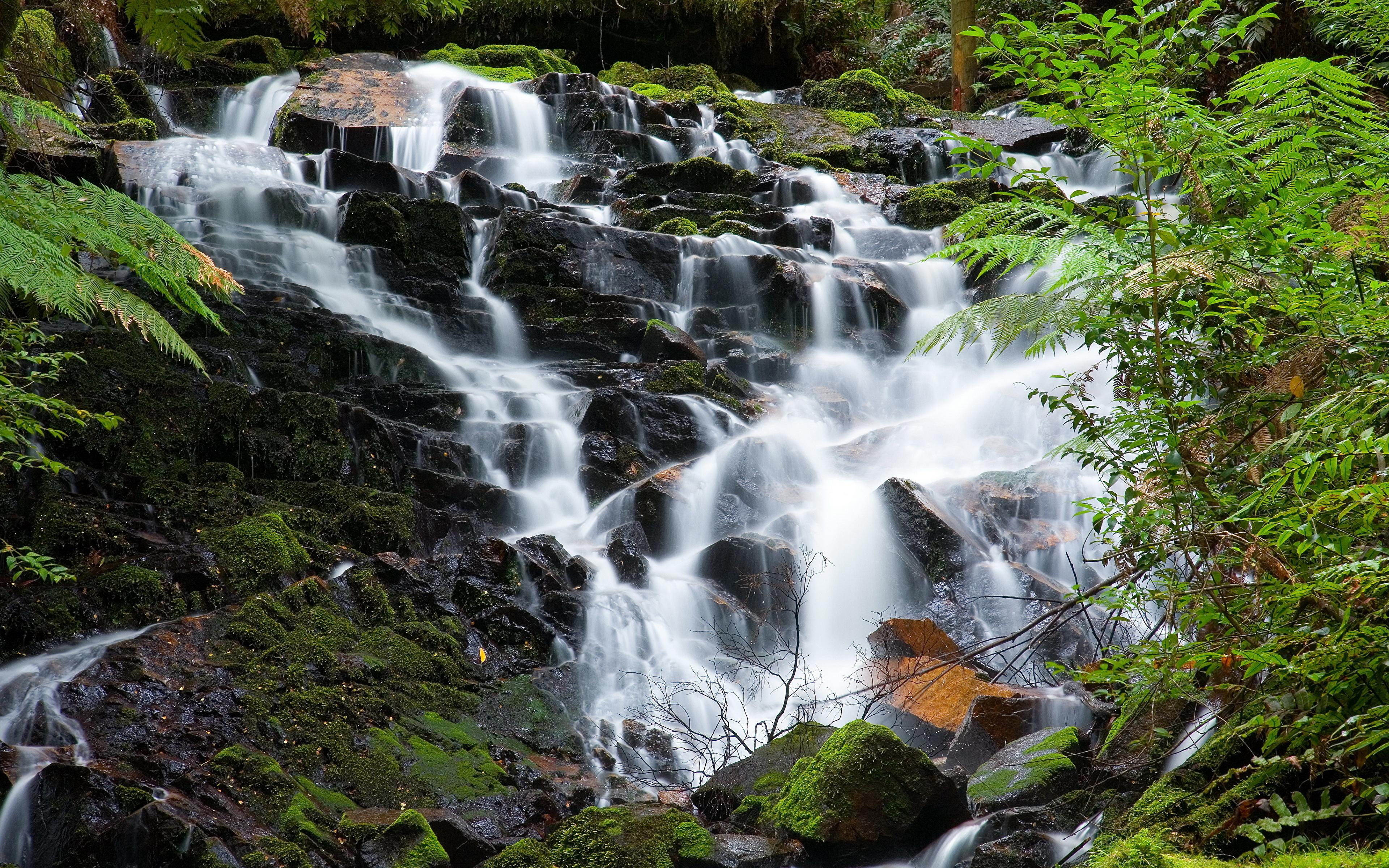 Hopetoun Falls, Otway Ranges, Victoria, Australia бесплатно
