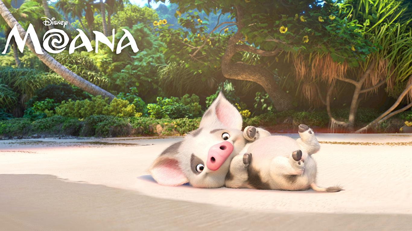 Картинка Disney Моана Домашняя свинья Pua Мультики 3D Графика 1366x768 Дисней 3д мультик Мультфильмы