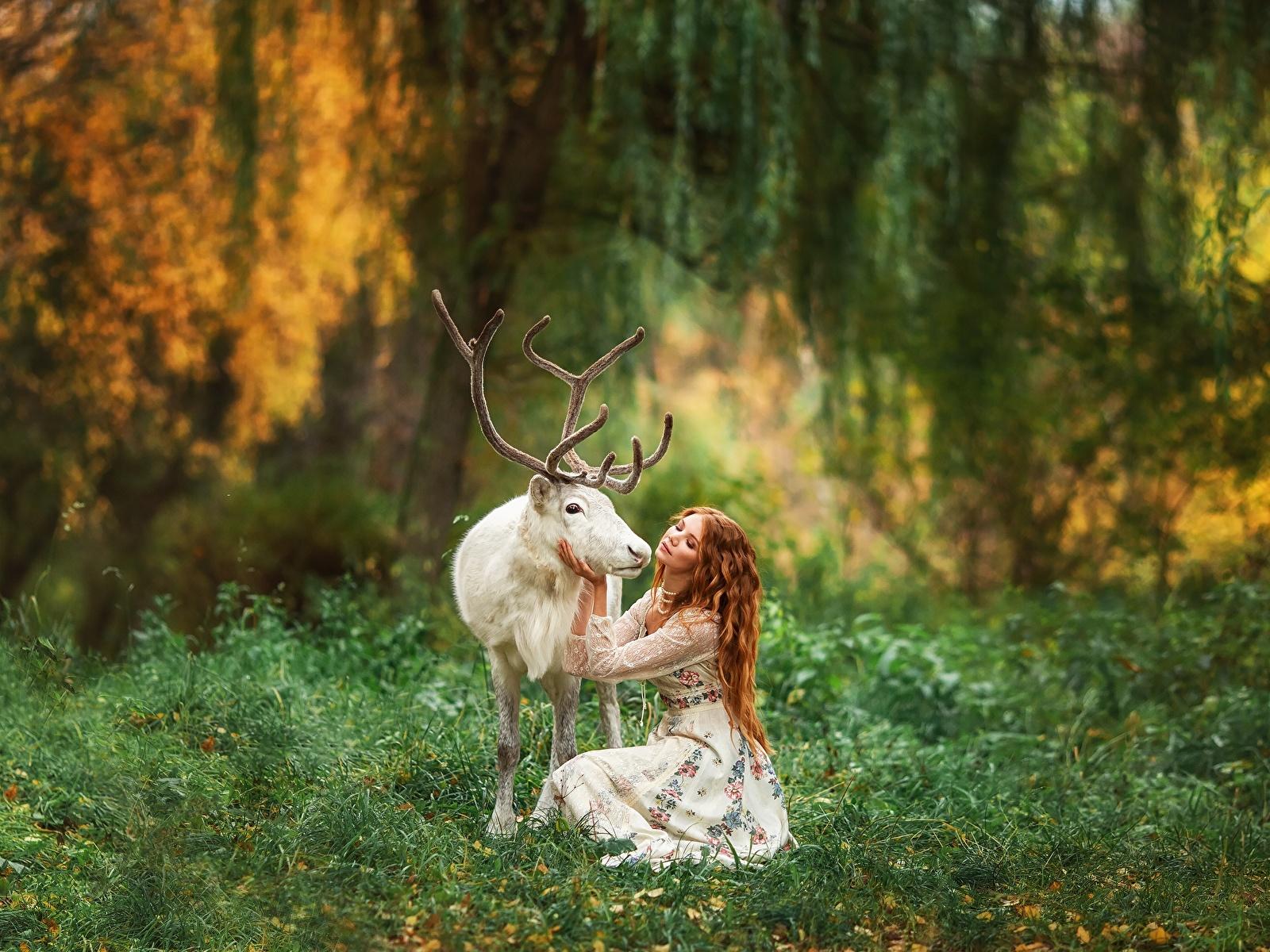 Фотографии Олени Рога Размытый фон белая молодая женщина животное 1600x1200 с рогами боке Белый белые белых девушка Девушки молодые женщины Животные