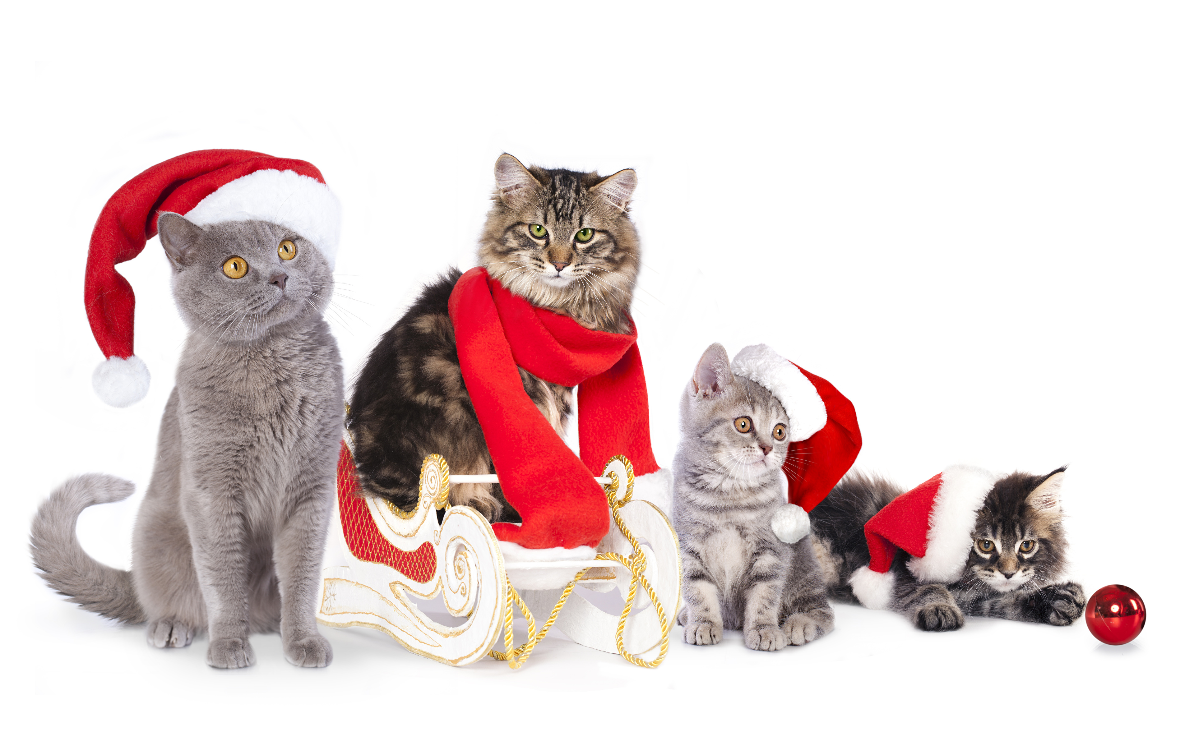 кот шапочка праздник скачать