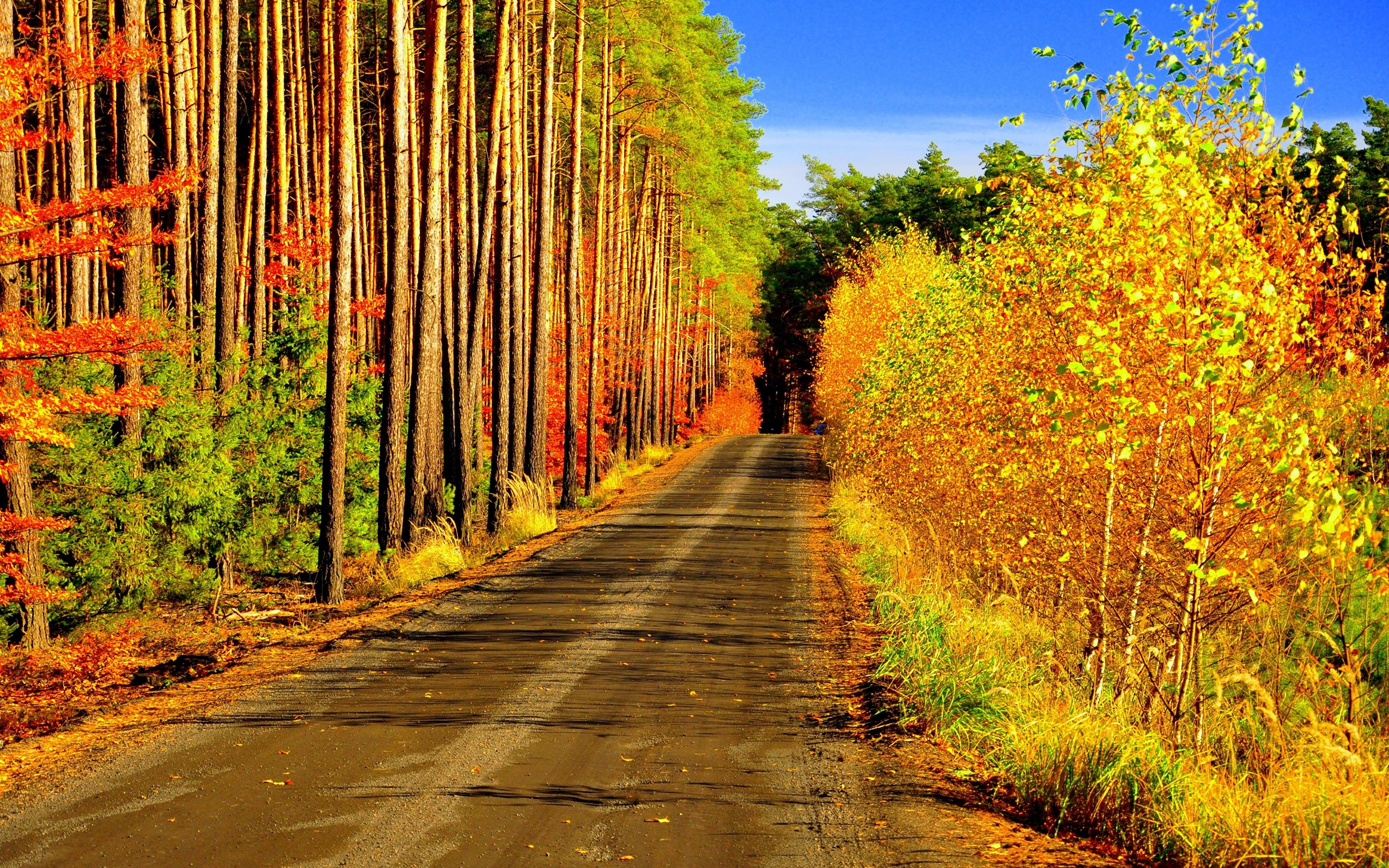 Осенняя дорога загрузить