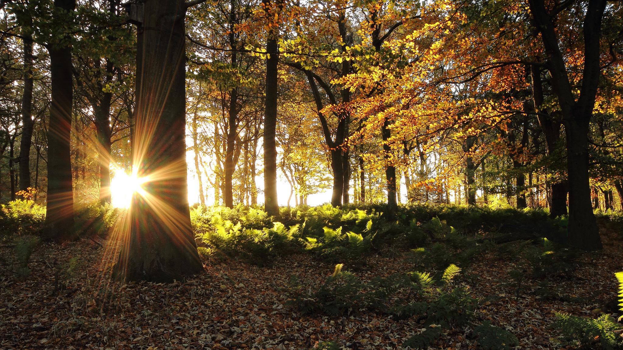 Лучи солнца в осеннем лесу загрузить