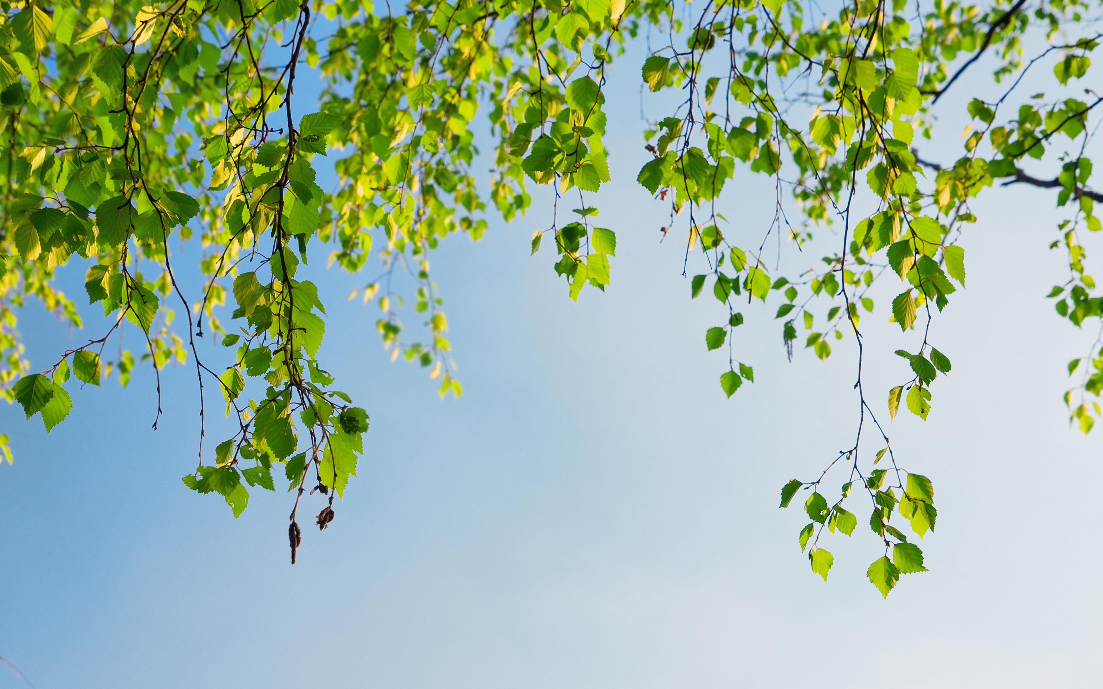 собака язык деревья березки без смс