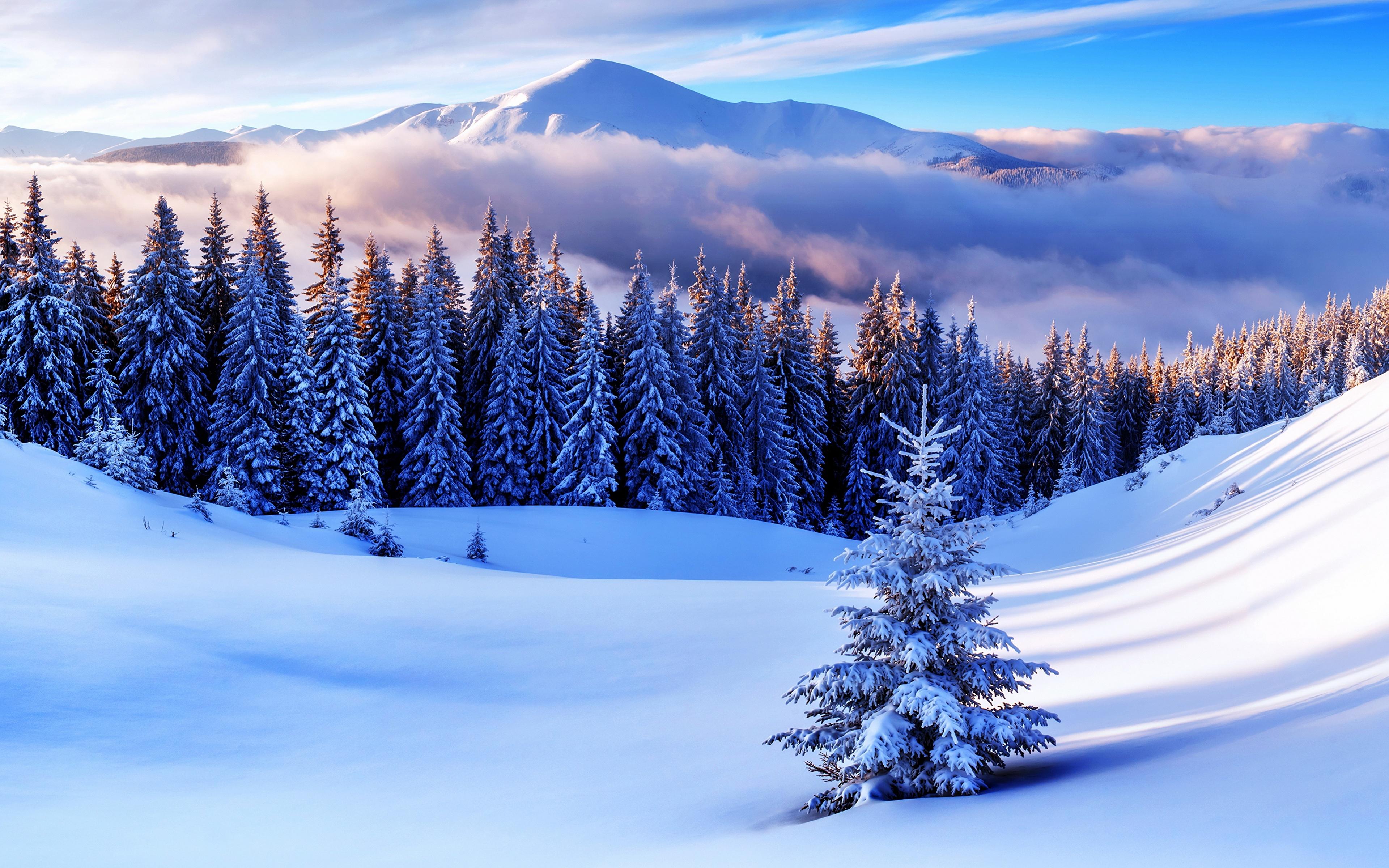 Снег горы зима ели бесплатно