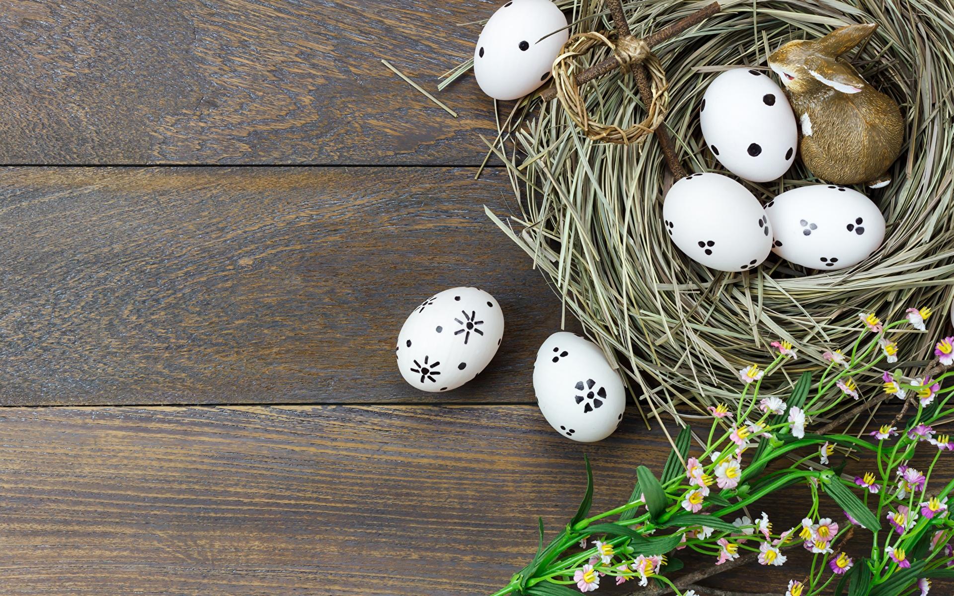Фото Пасха Яйца Гнездо Шаблон поздравительной открытки Доски 1920x1200 яиц яйцо яйцами гнезда гнезде