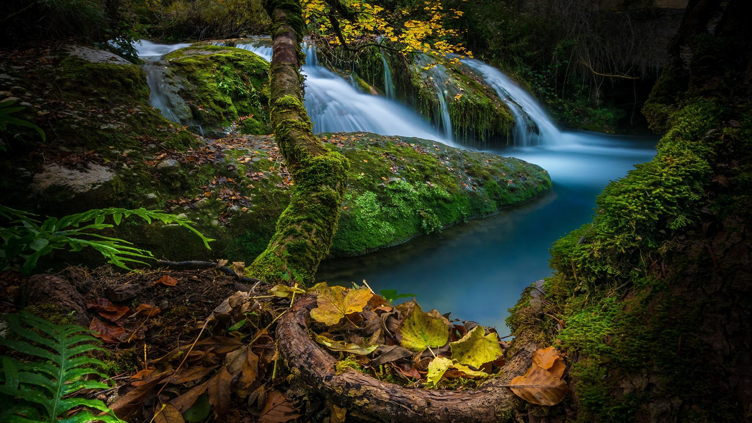 Картинки лист Испания Осень Природа Водопады мхом Камни 2560x1440 Листва Листья осенние Мох мха Камень