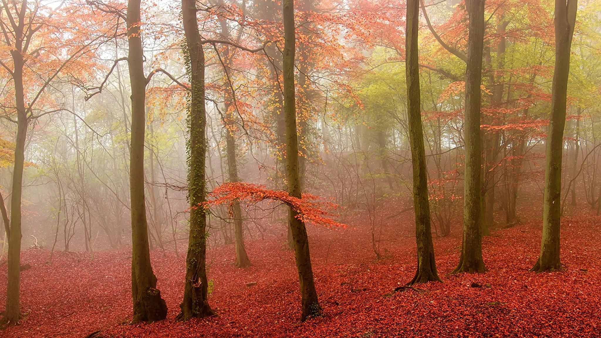 Осень красная деревья туман загрузить