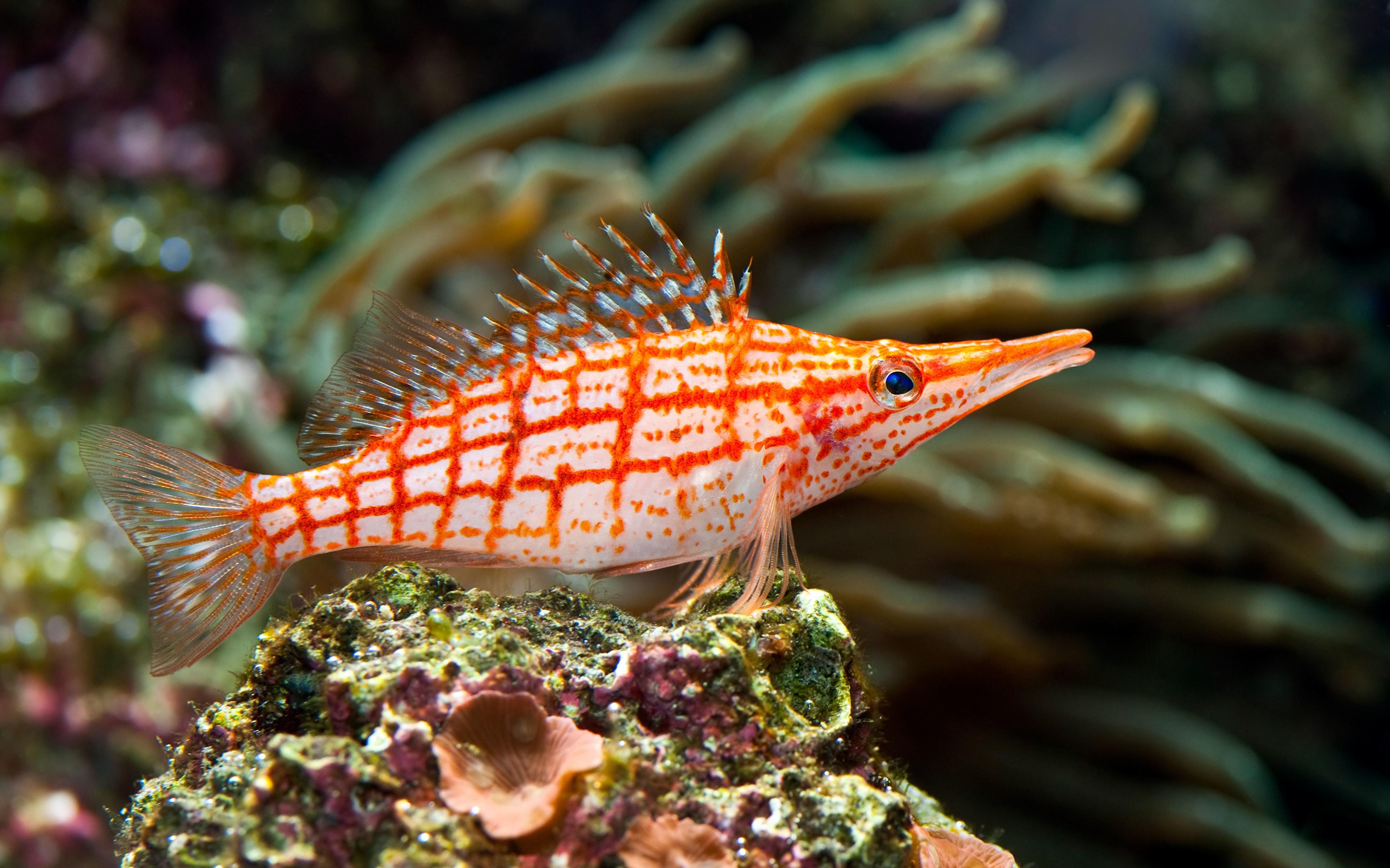 Обои для рабочего стола Рыбы Подводный мир marine fish Животные 3840x2400 животное