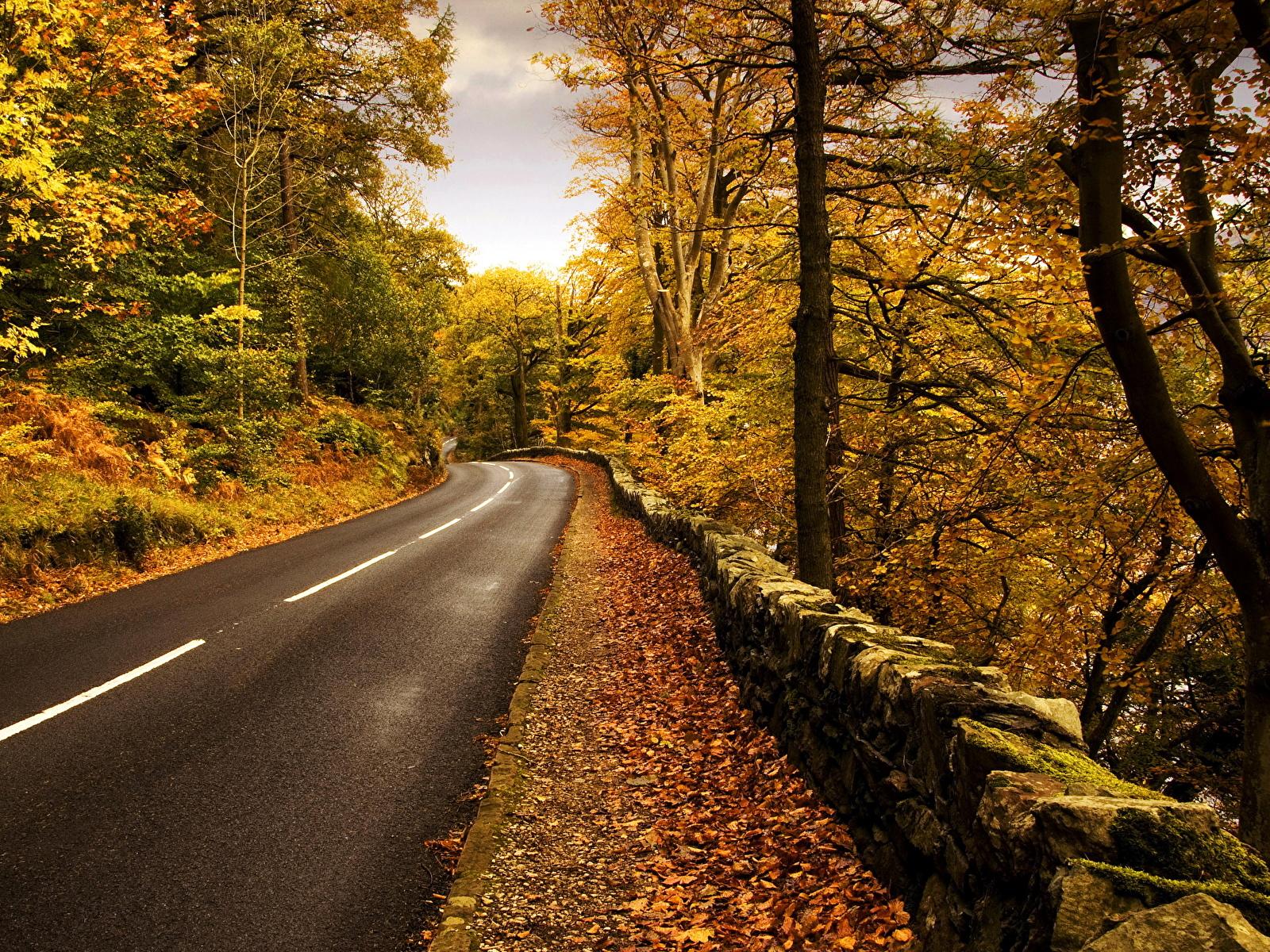 Фотография Осень Природа Дороги Асфальт сезон года 1600x1200 осенние Времена года