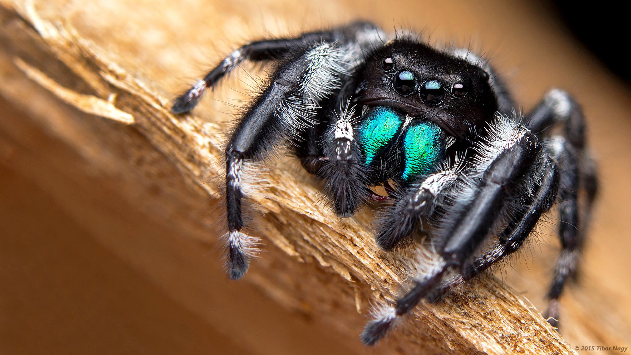 природа макро насекомое глаза загрузить