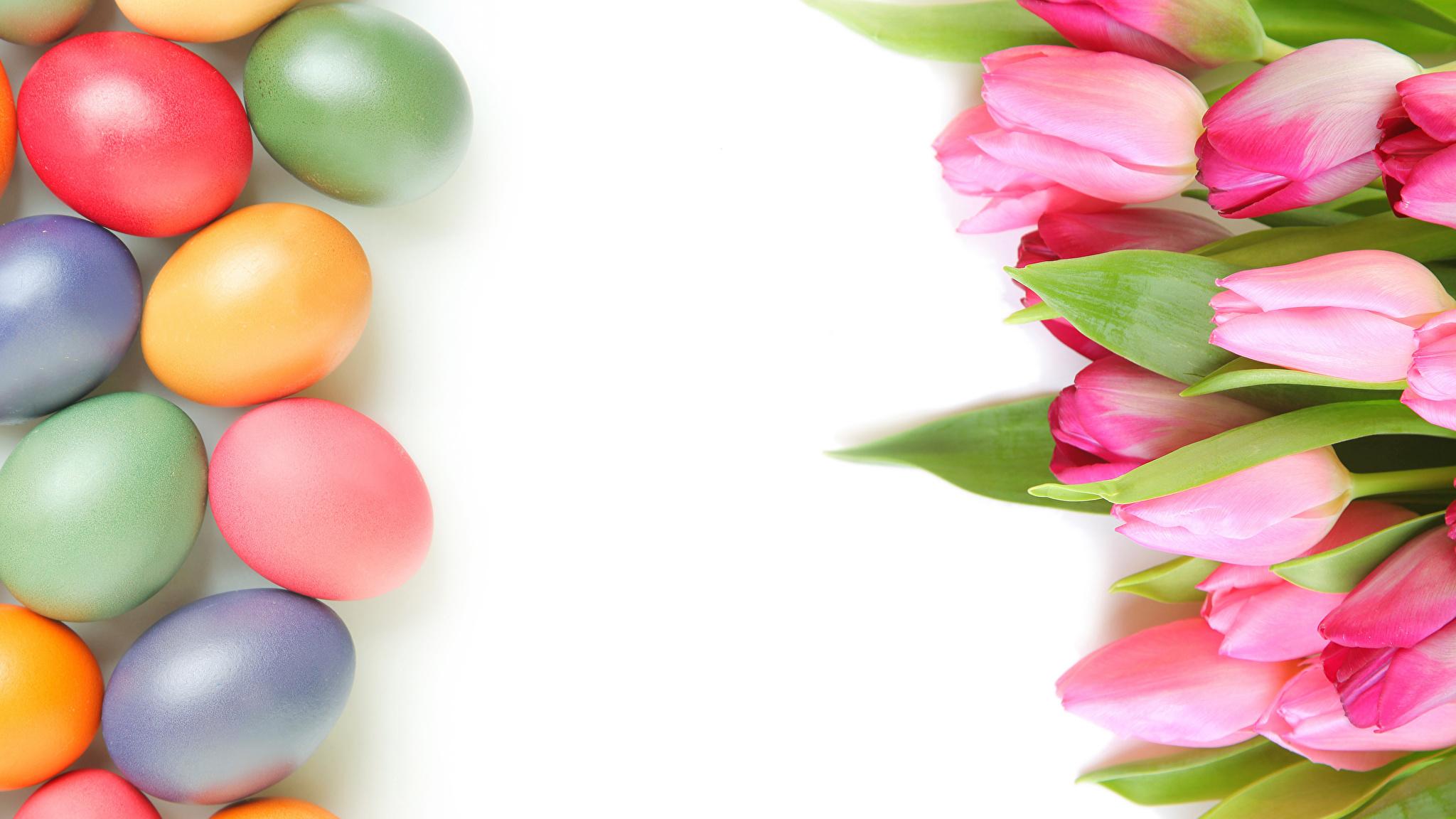 природа цветы тюльпаны яйца пасха загрузить