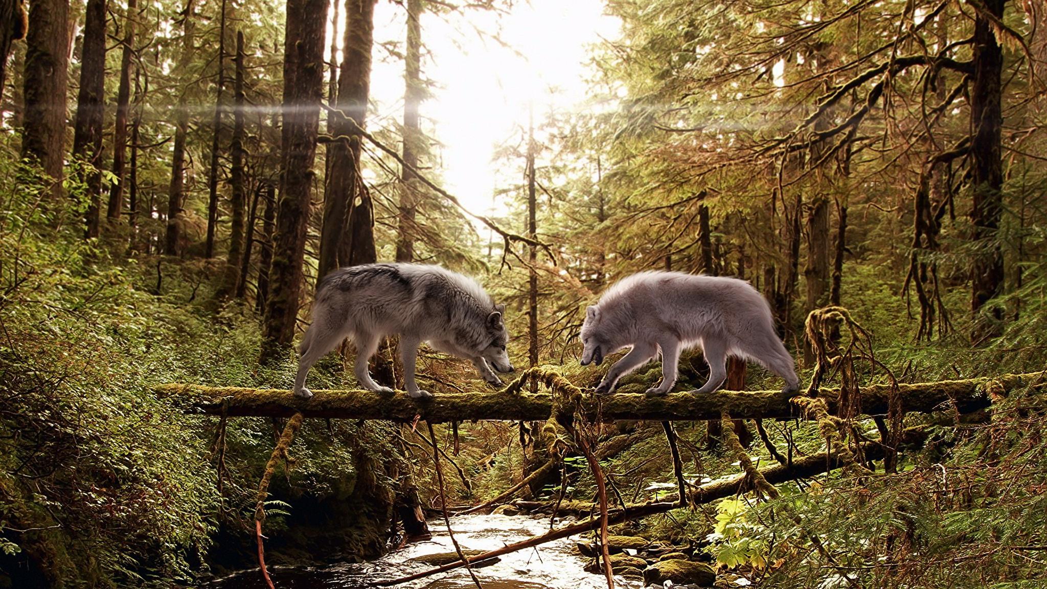 Волк в лесу на телефон