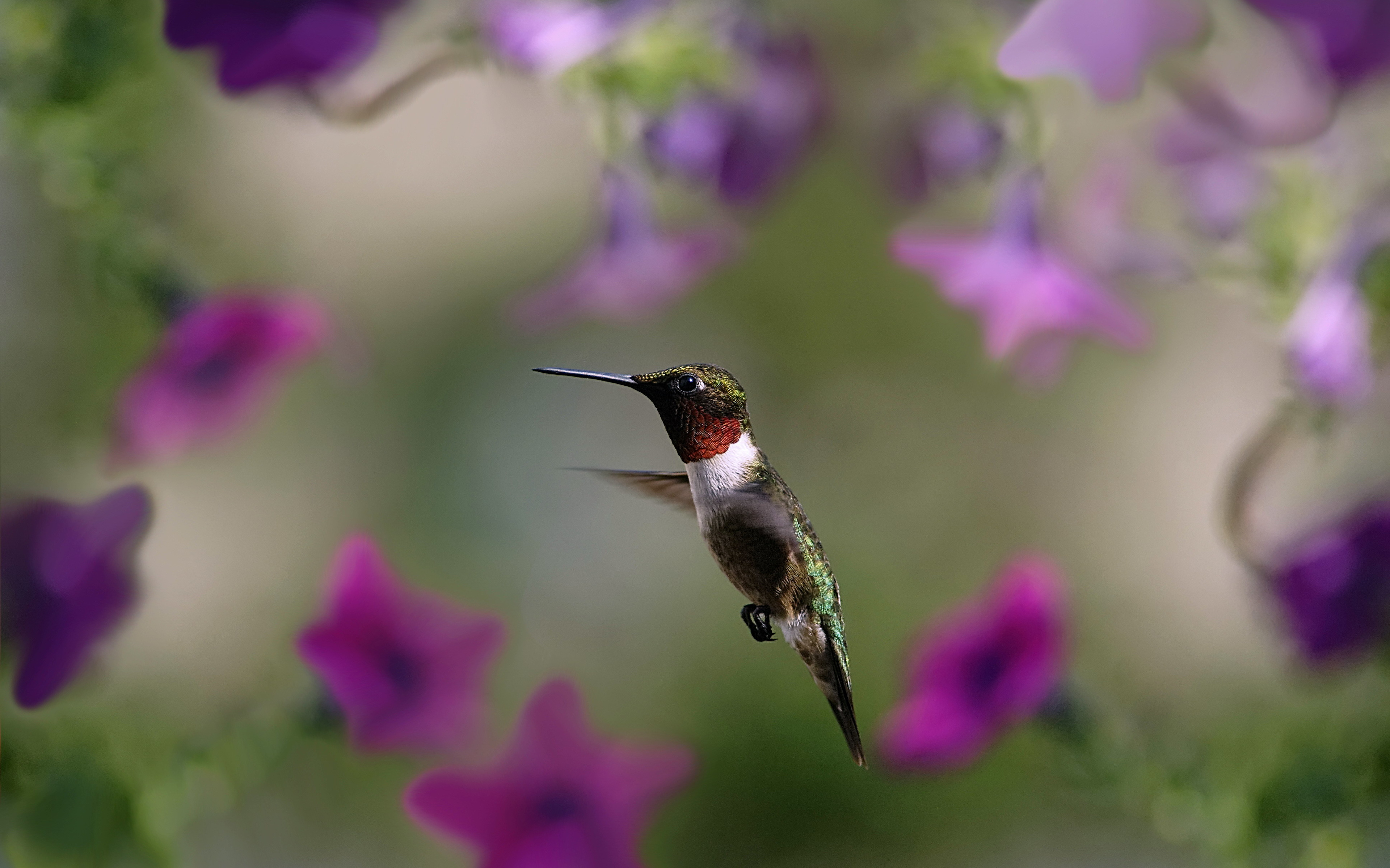 животное птица колибри макро скачать