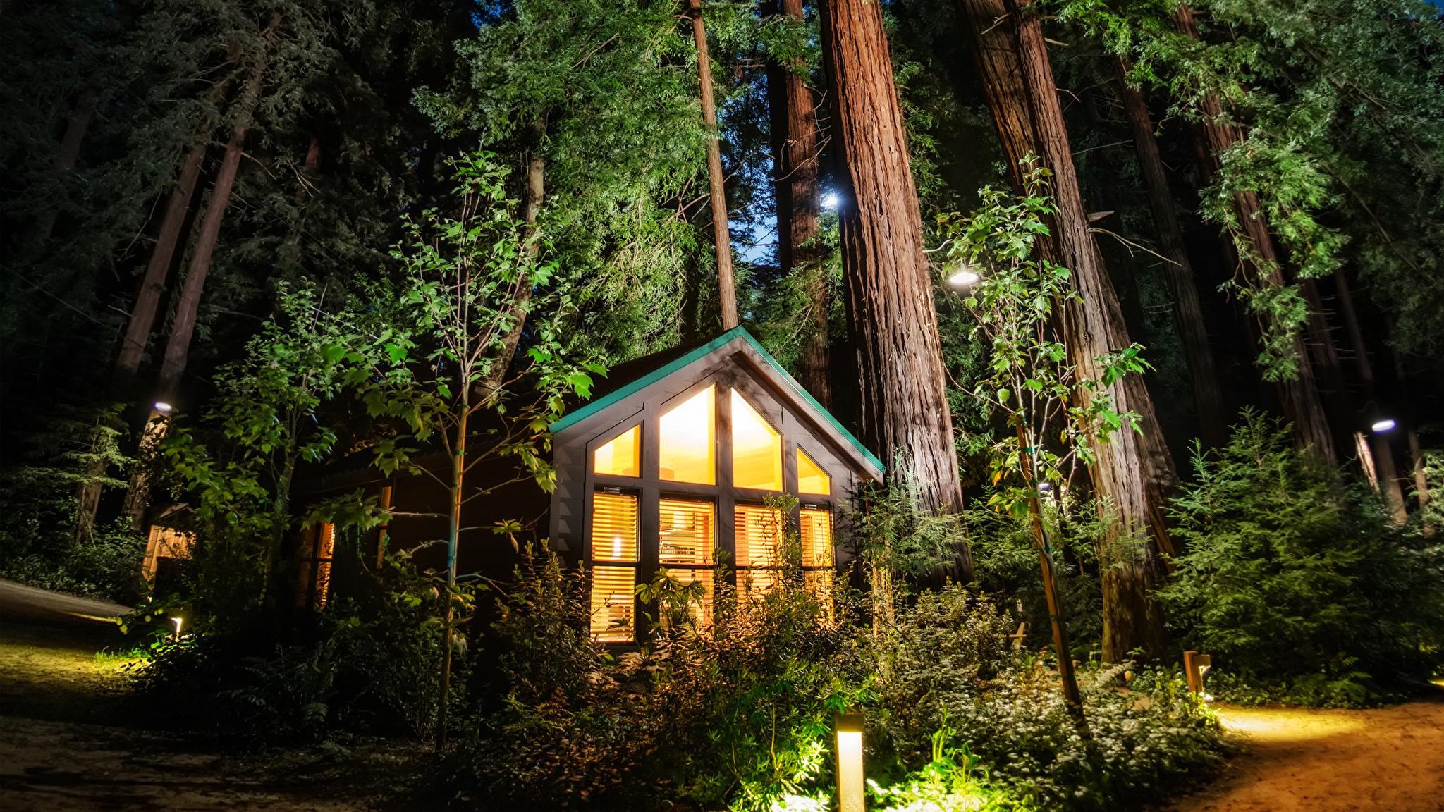 дом лес огни ночь анонимно