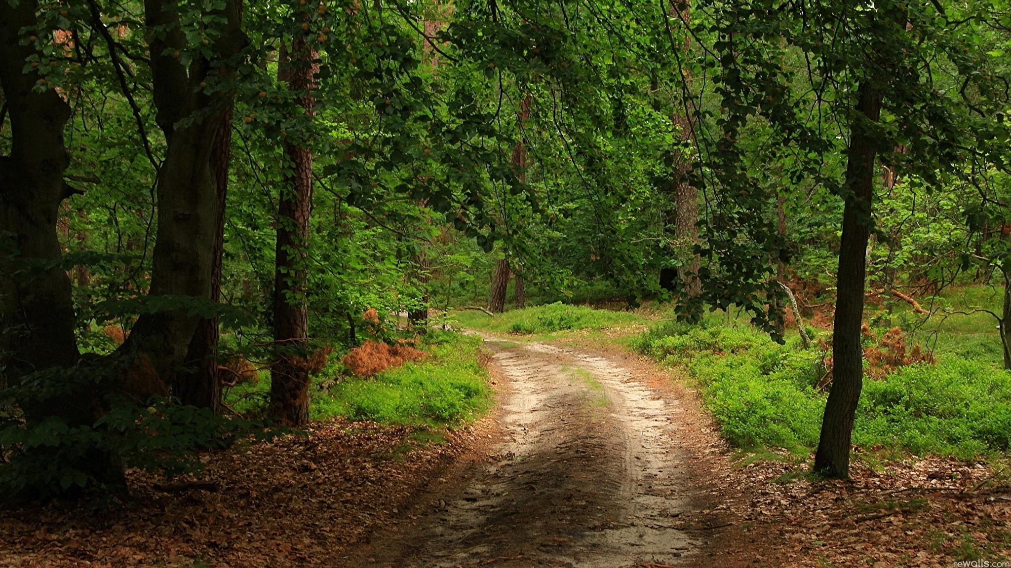 Дорога по лесу без регистрации