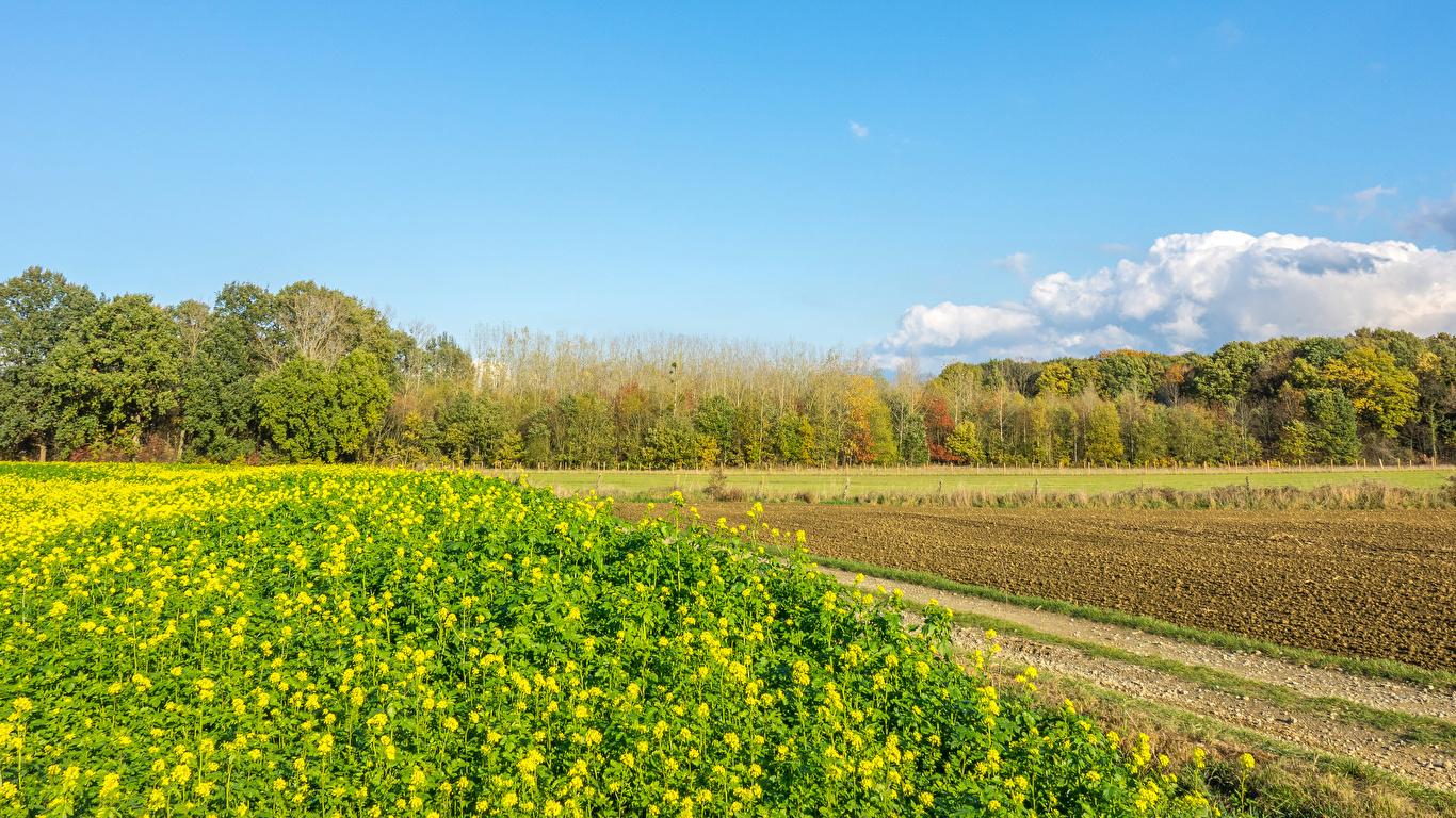 Фотография Бельгия Houwaart Vlaams Brabant Природа весенние Поля 1366x768 Весна
