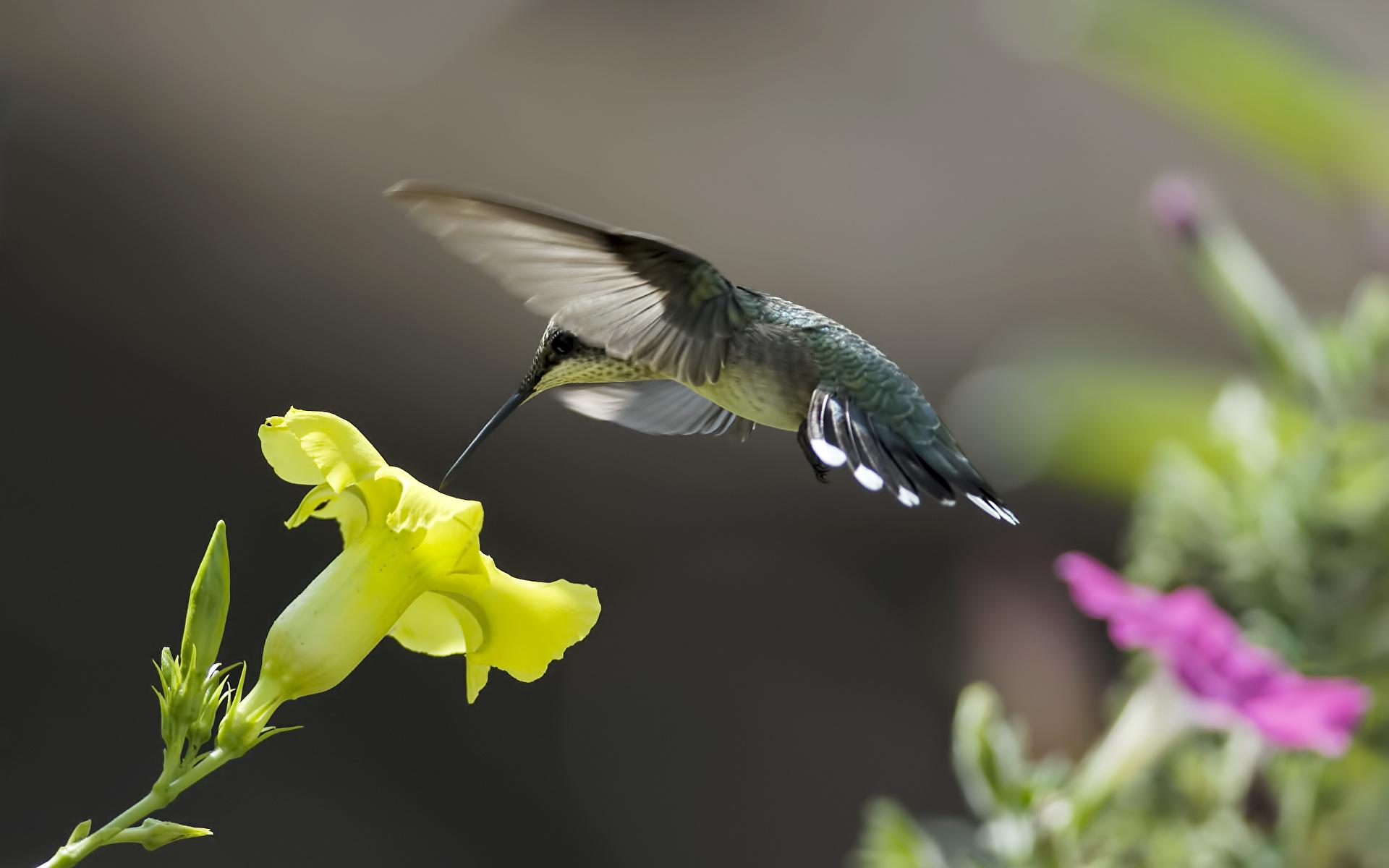 природа колибри цветы птицы бесплатно