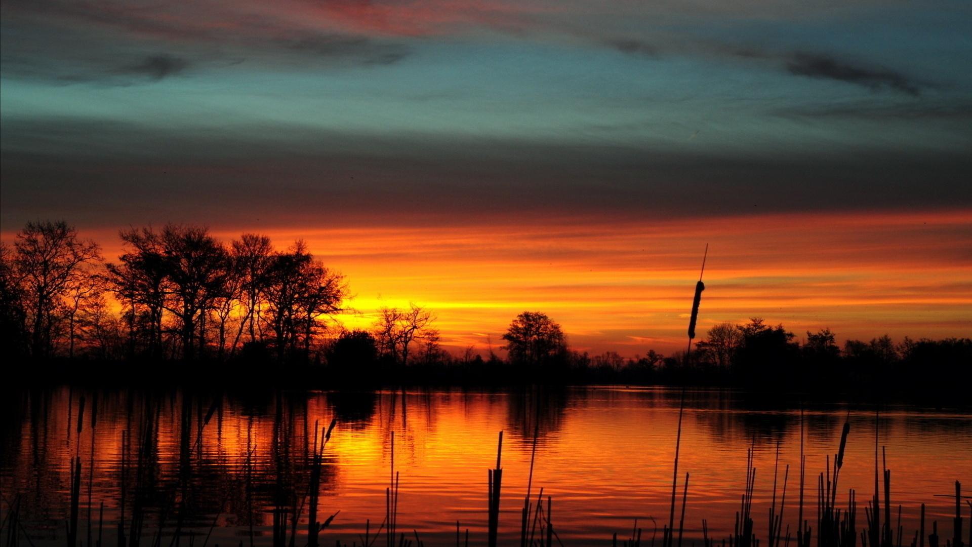 дуб на озере во время заката на телефон