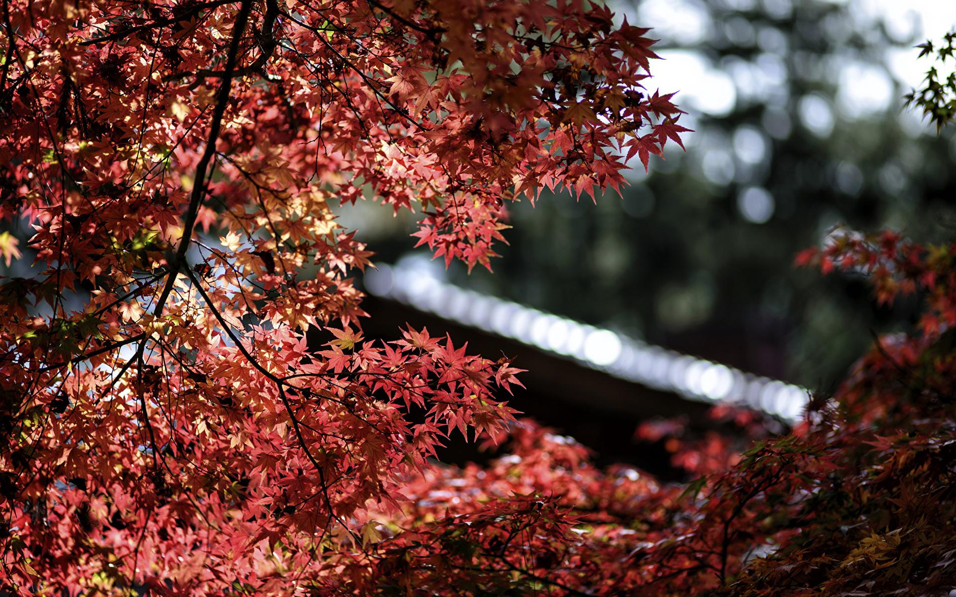 листья дерево фокус скачать