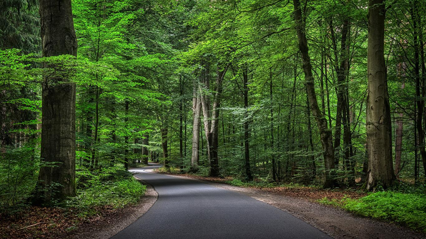 Картинки Германия Природа лес Дороги Деревья 1366x768 Леса дерево дерева деревьев