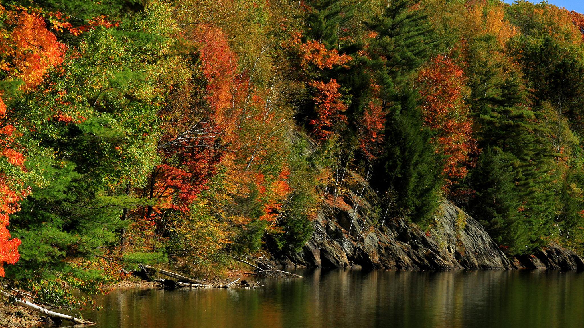 речка осень лес без регистрации