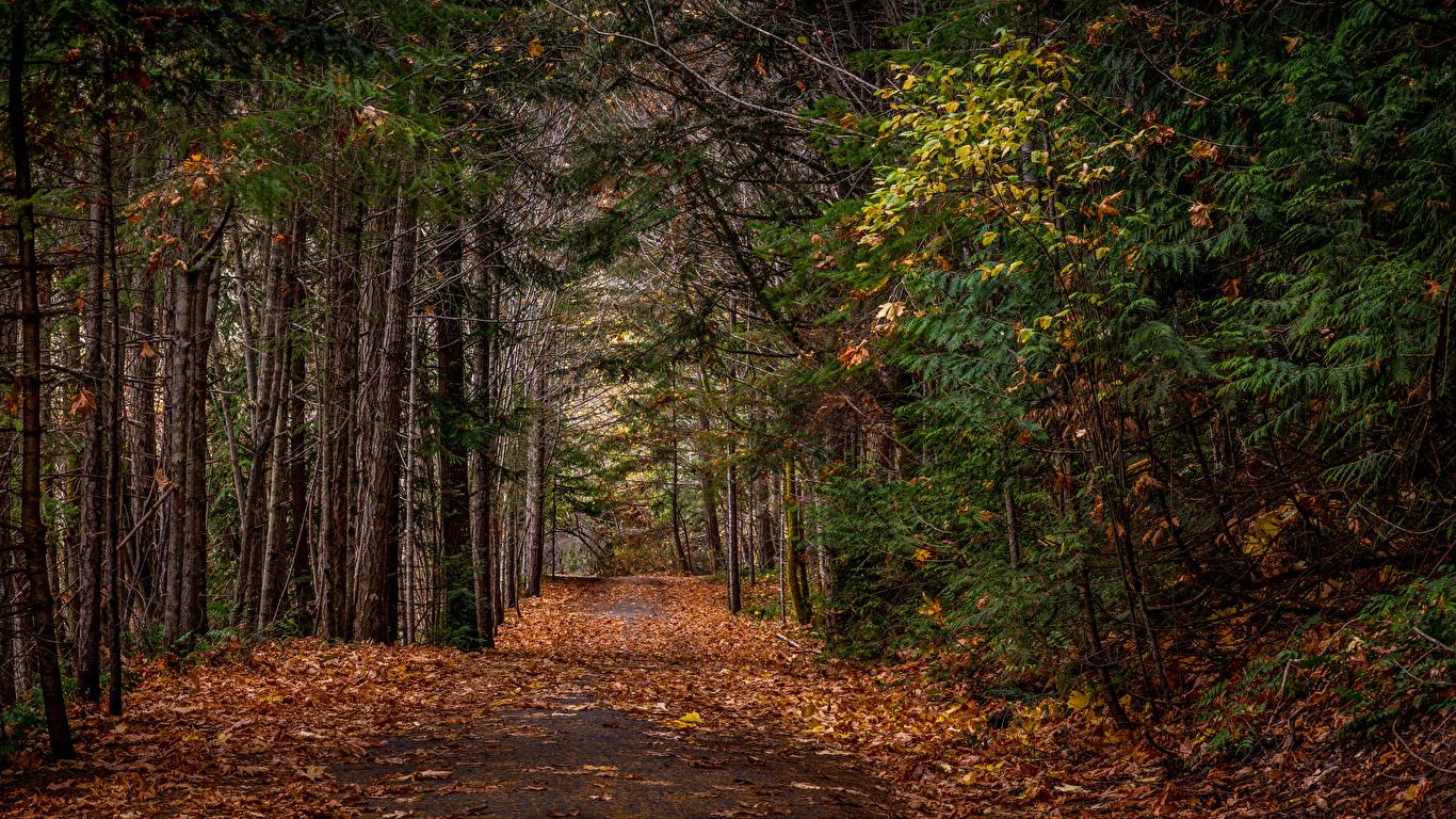 Фотография лист Осень Природа Леса Деревья 1366x768 Листья Листва осенние лес дерево дерева деревьев