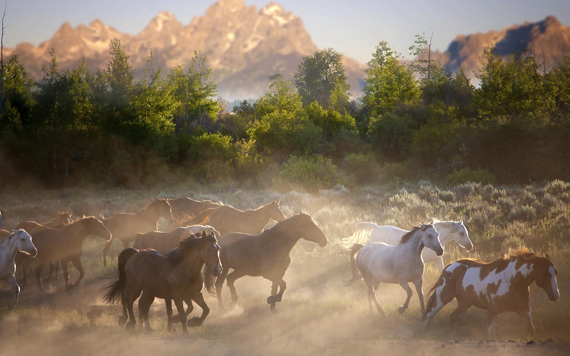 оно к чему сниться стадо коней термобелье поленитесь обязательно