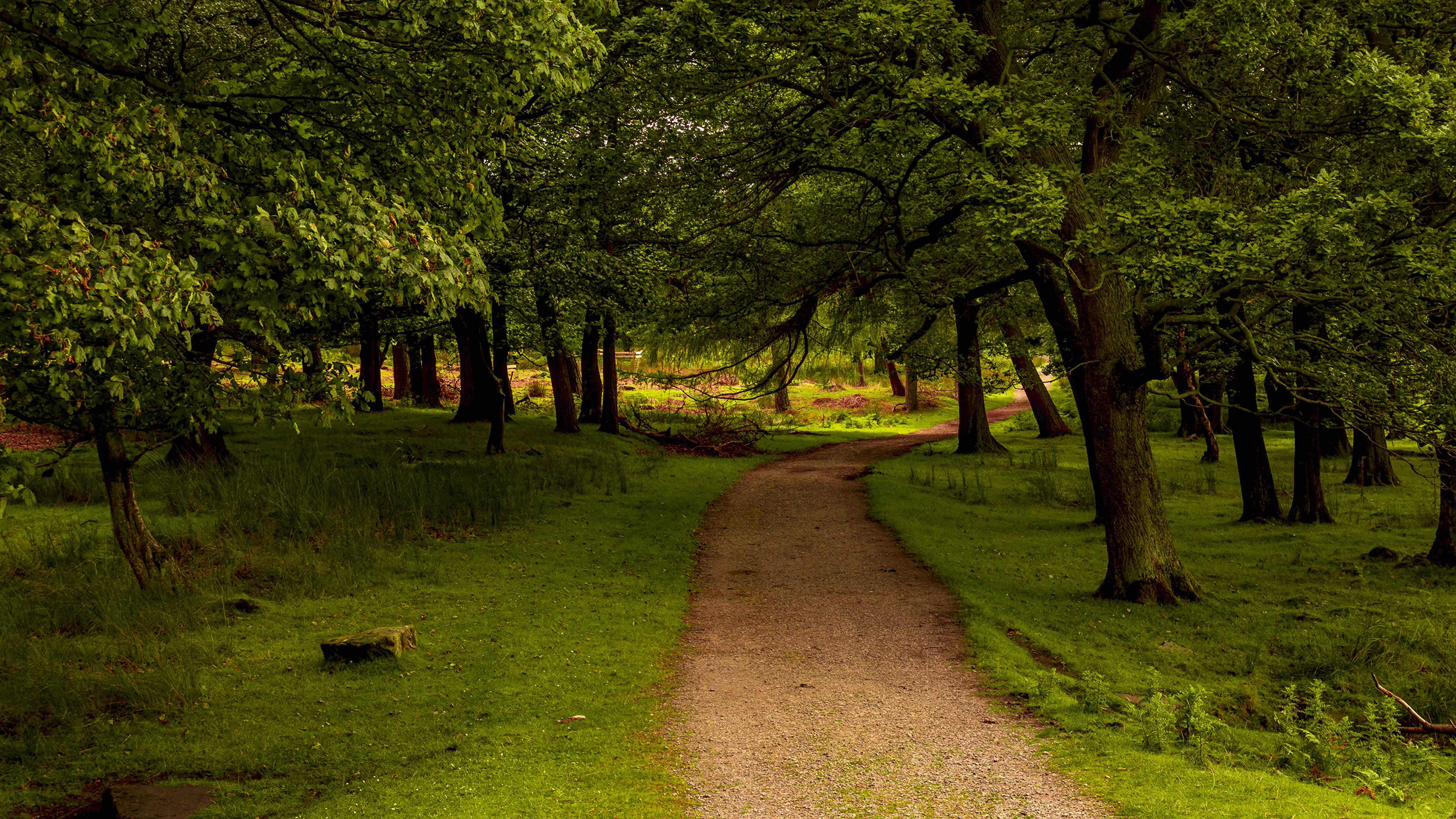 Деревья вдоль тропинки, Англия подборки