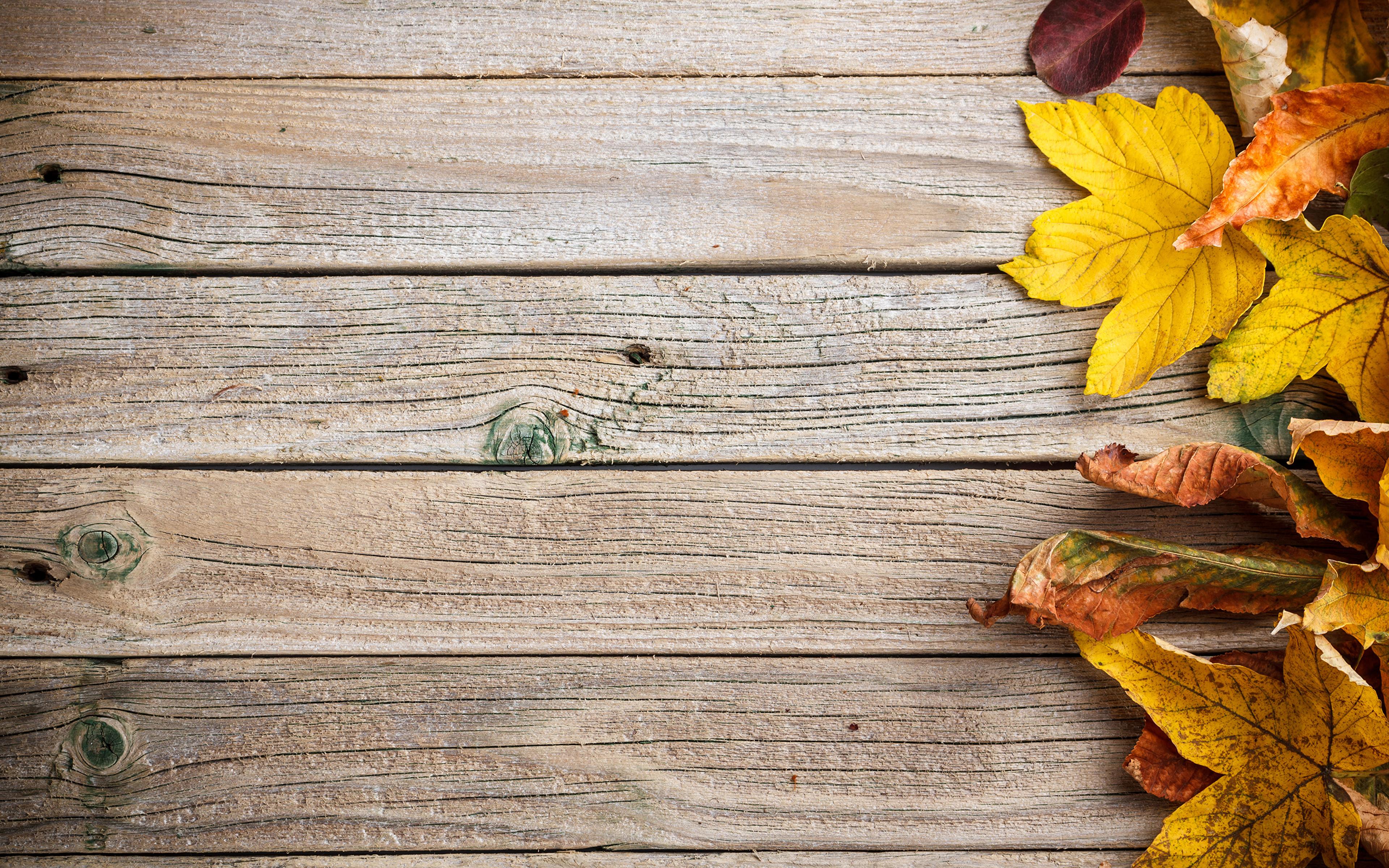 Листья на досках скачать