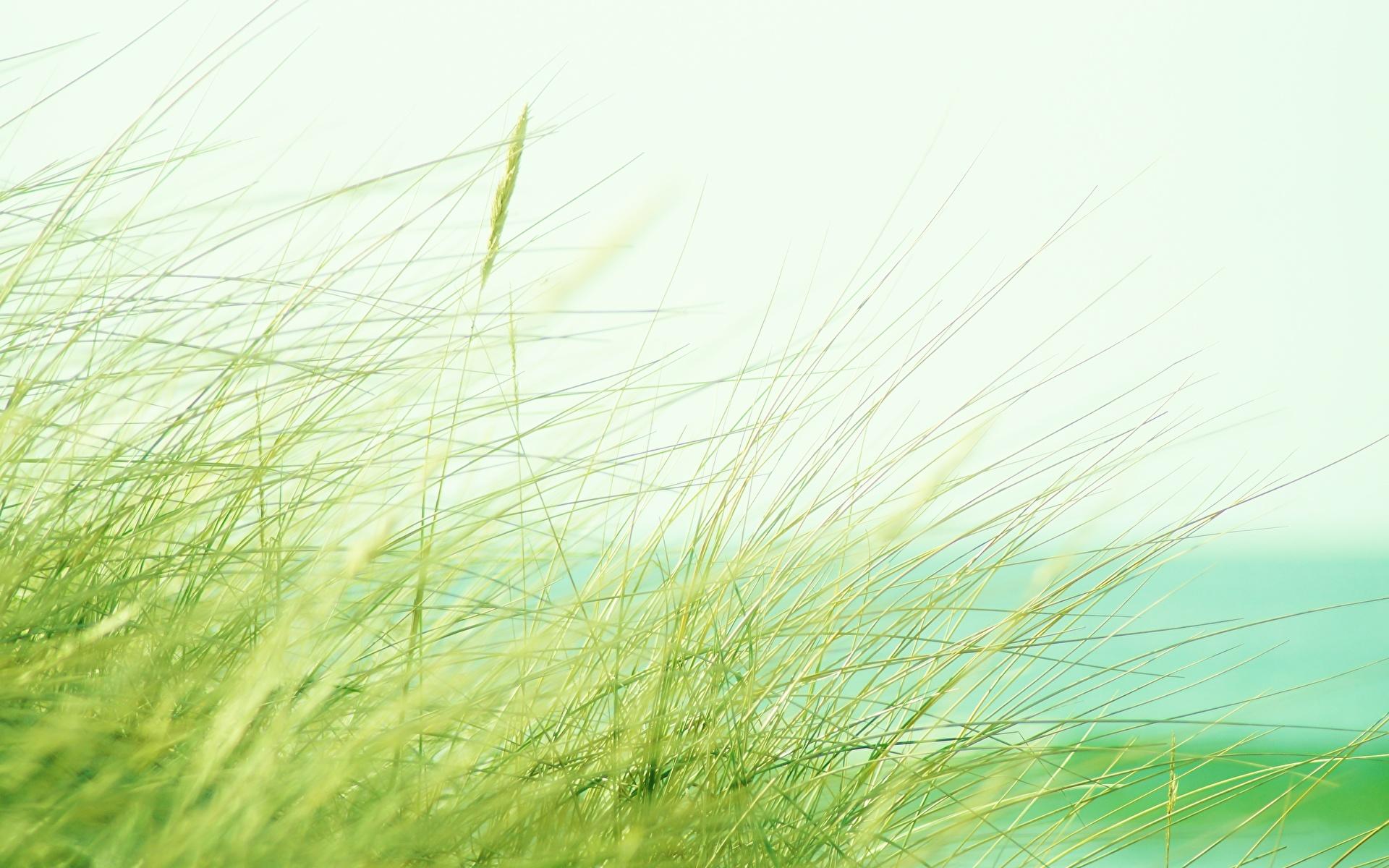 Обои для рабочего стола Природа траве Крупным планом 1920x1200 Трава вблизи