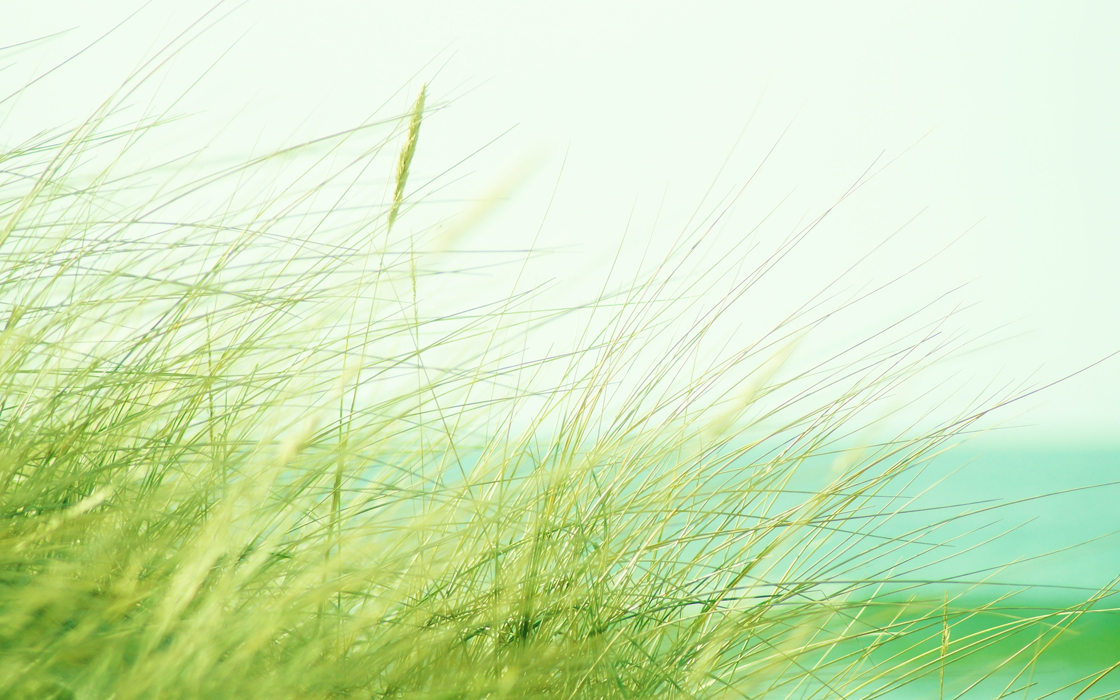 Обои для рабочего стола Природа траве Крупным планом 3840x2400 Трава вблизи
