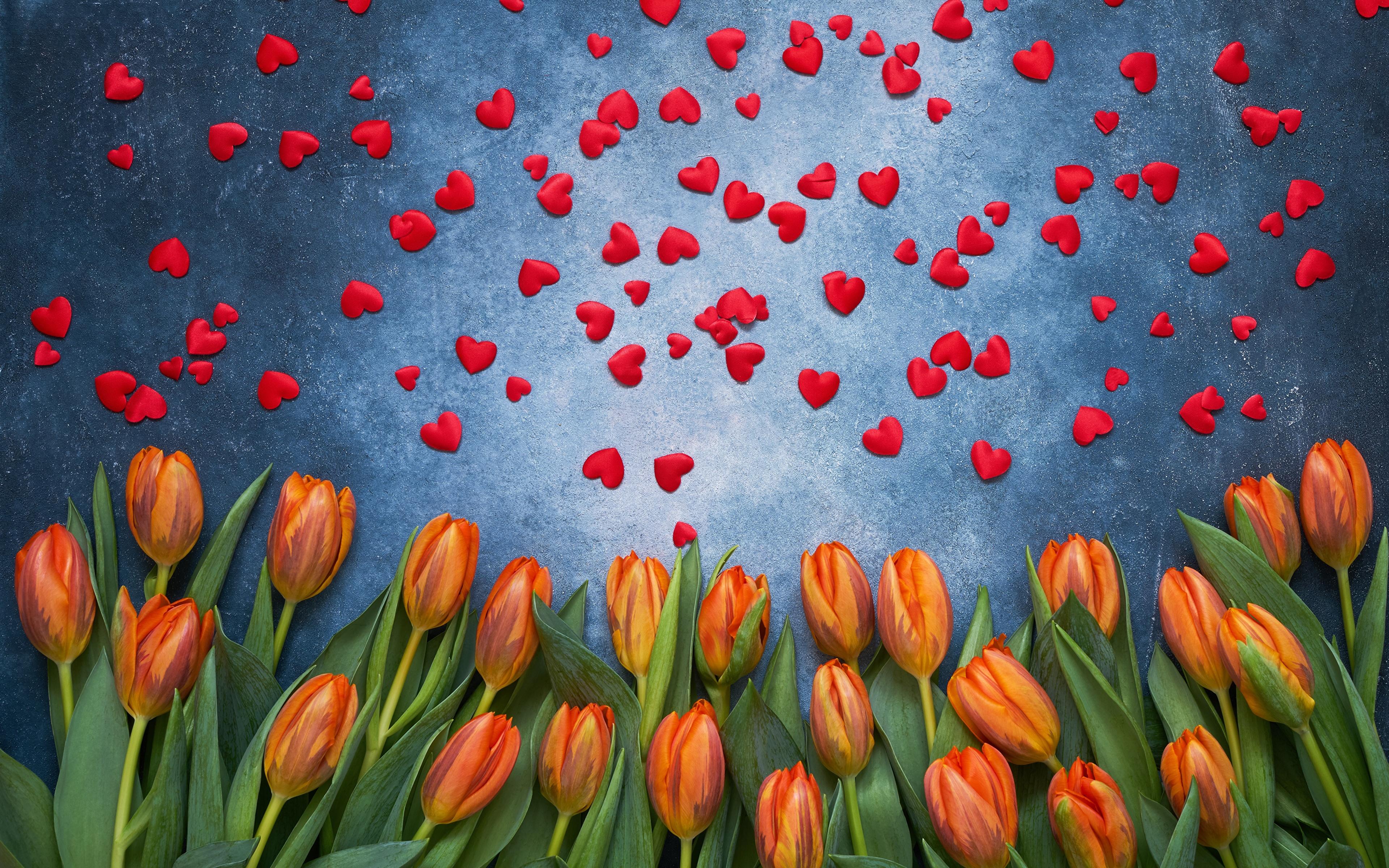 Фотография День святого Валентина сердечко тюльпан цветок 3840x2400 День всех влюблённых серце сердца Сердце Тюльпаны Цветы
