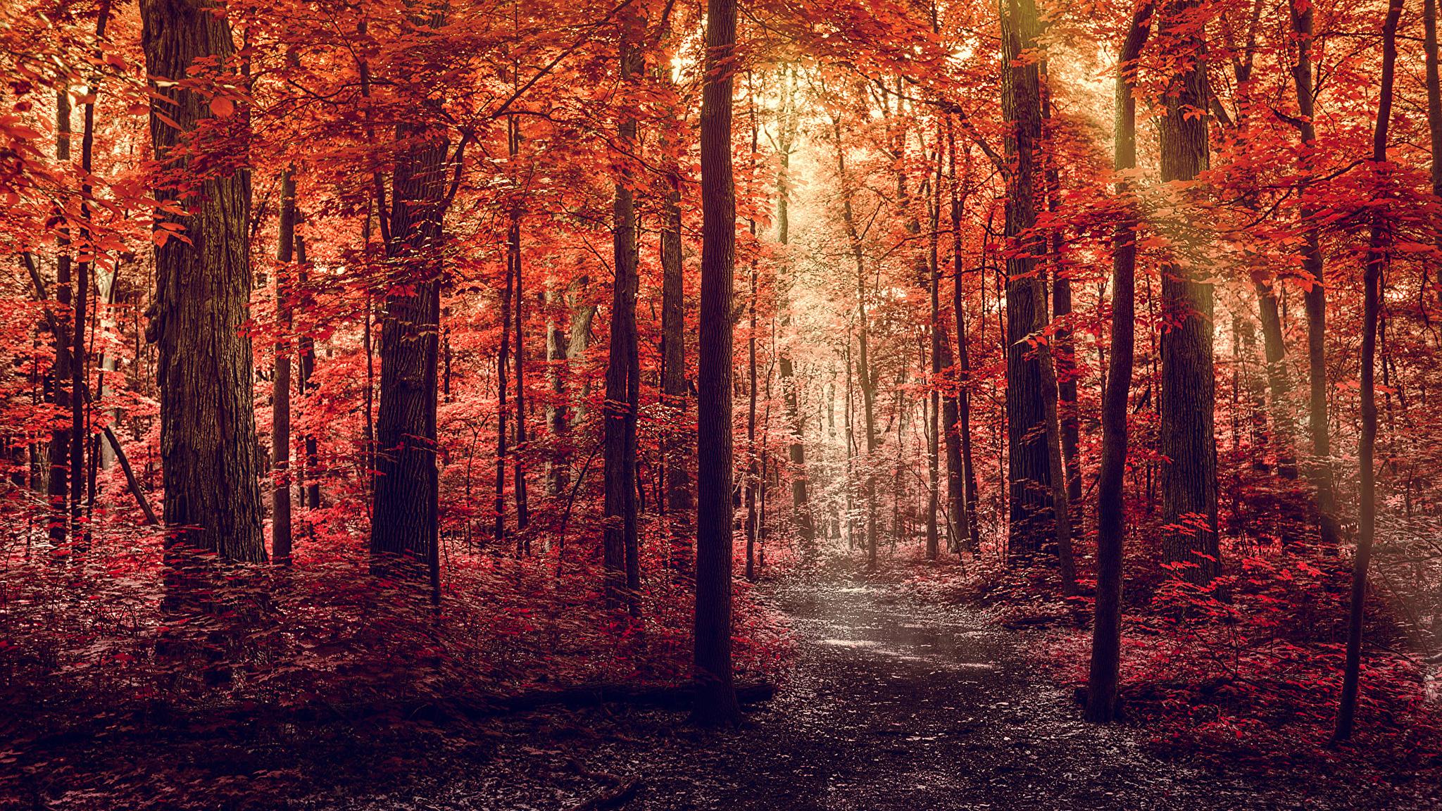 Осень природа тропа деревья без смс
