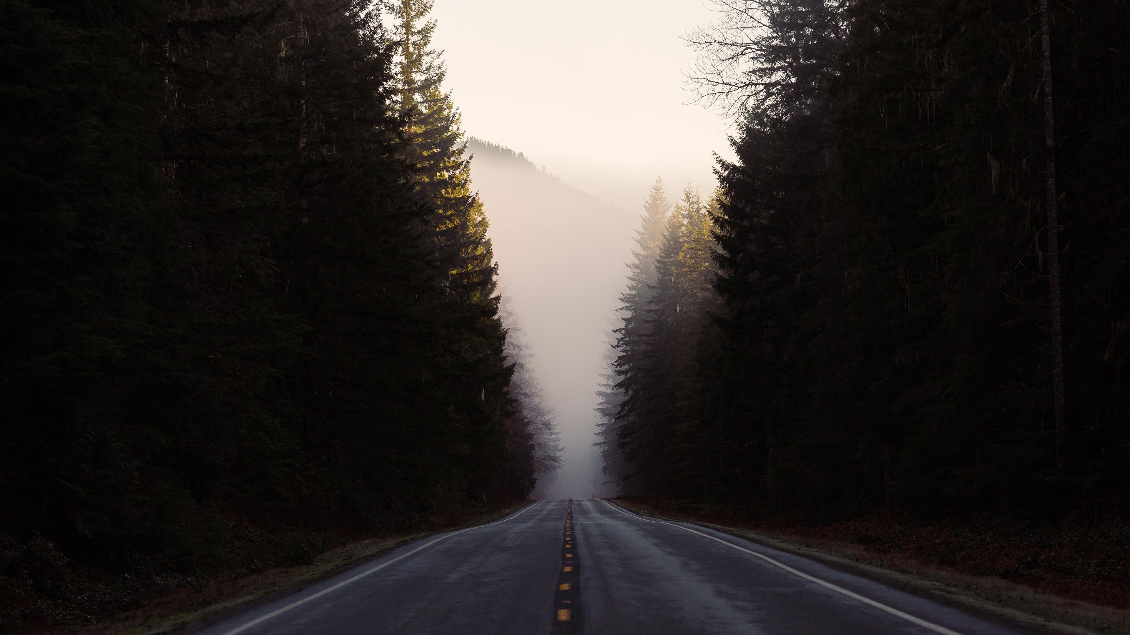 Дорога в тумане подборки