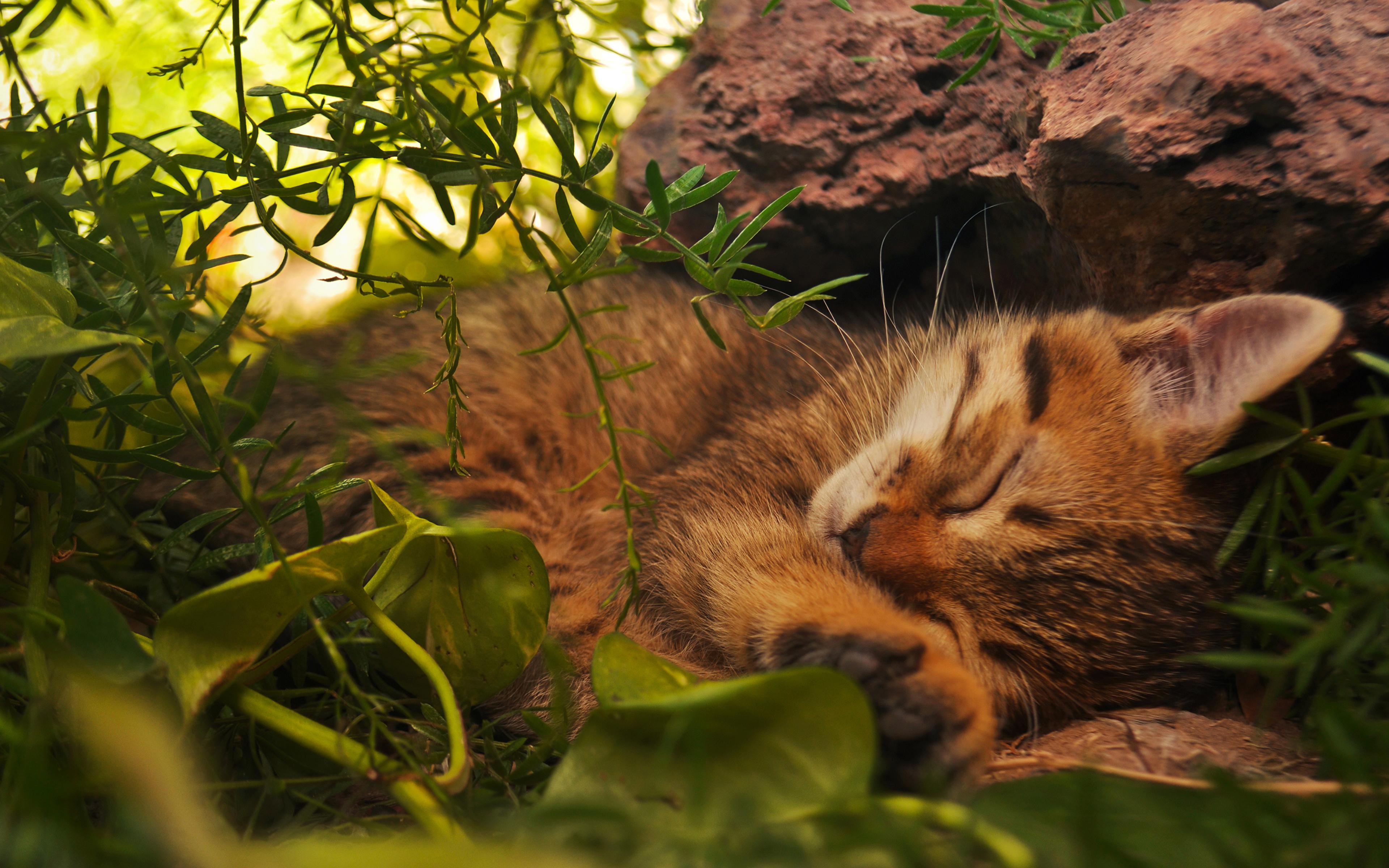 природа рыжий кот трава листья животное рот без смс