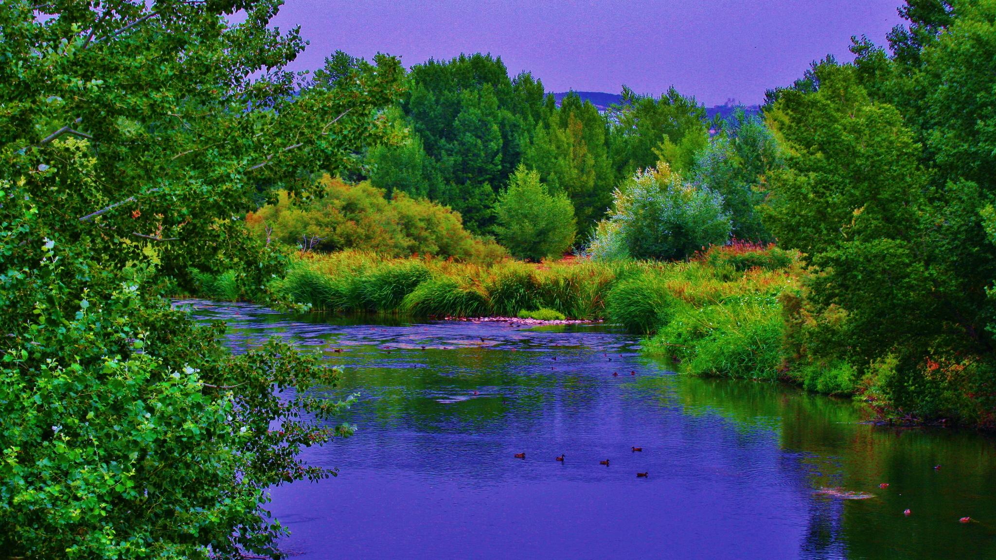 Beech Trees Along the Saliencia River, Somiedo Natural Park, Asturias, Spain на телефон